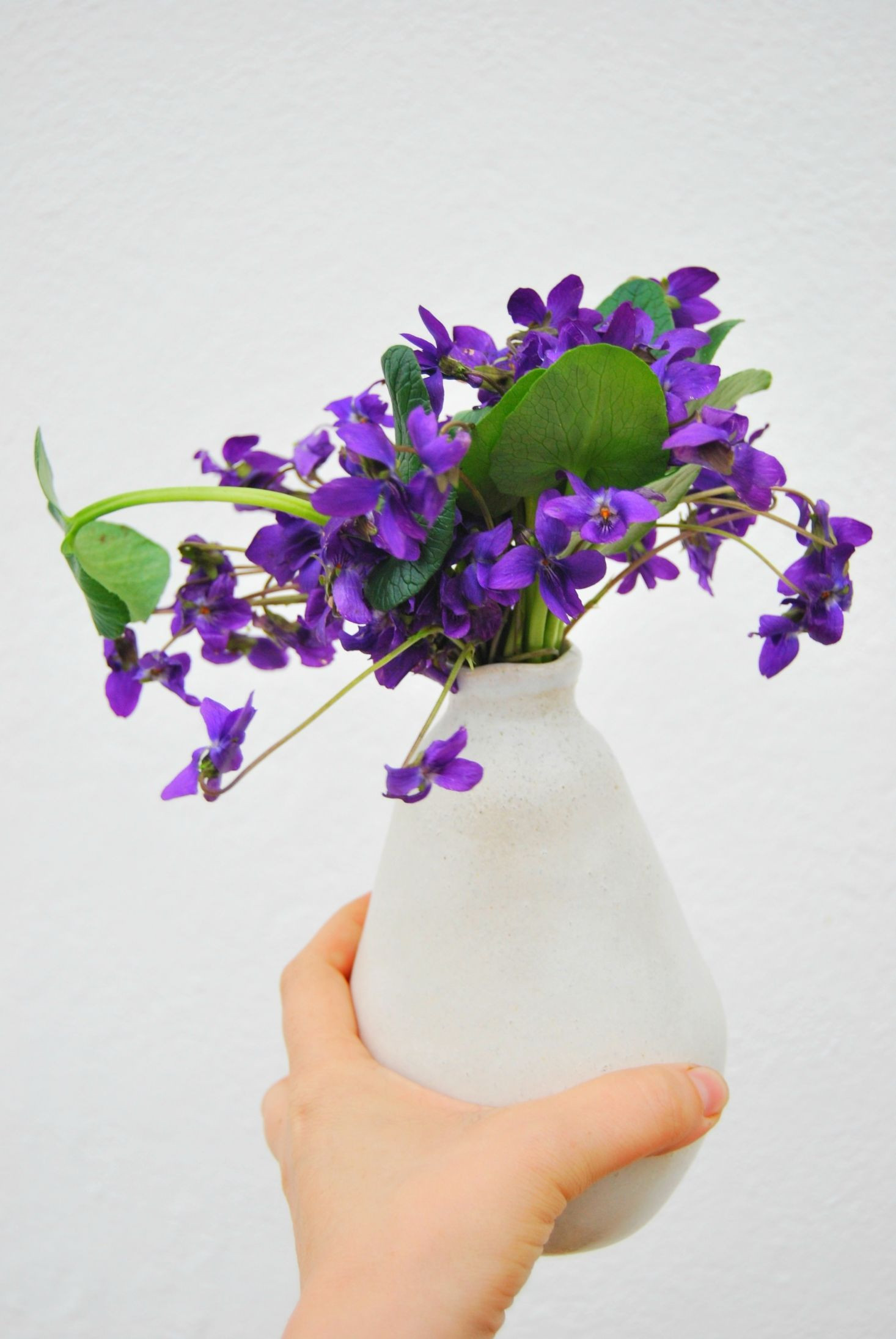 Wild Violets Rethinking Eliza Doolittle s Favorite Flower