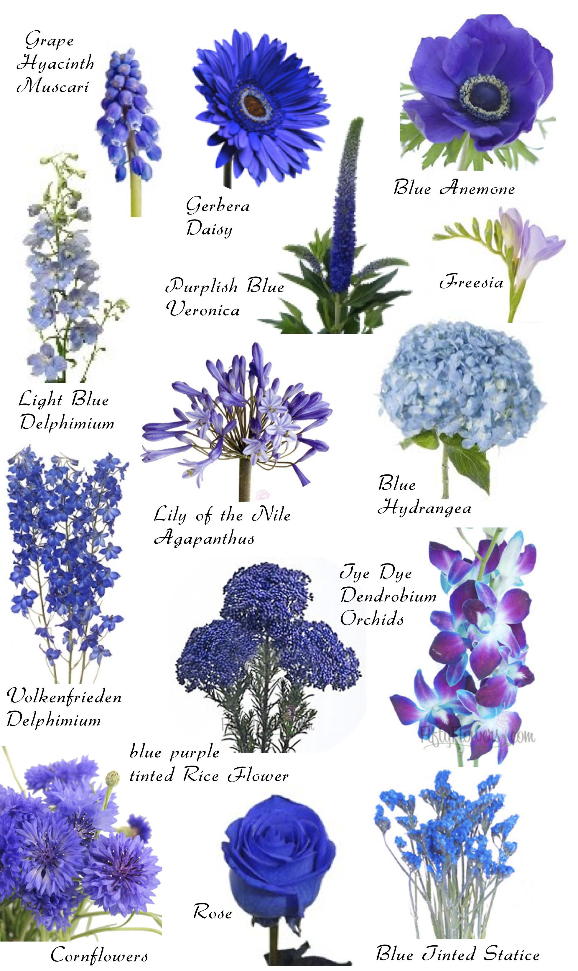 SO MANY FLOWERS Flowers by color So amazing and helpful