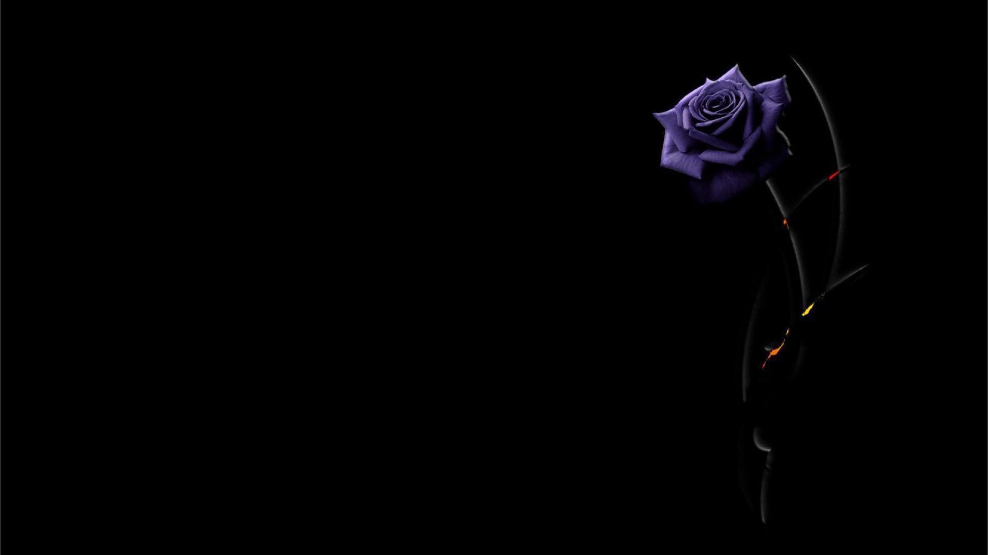 Beautiful Purple Flowers Wallpaper For Desktop x px