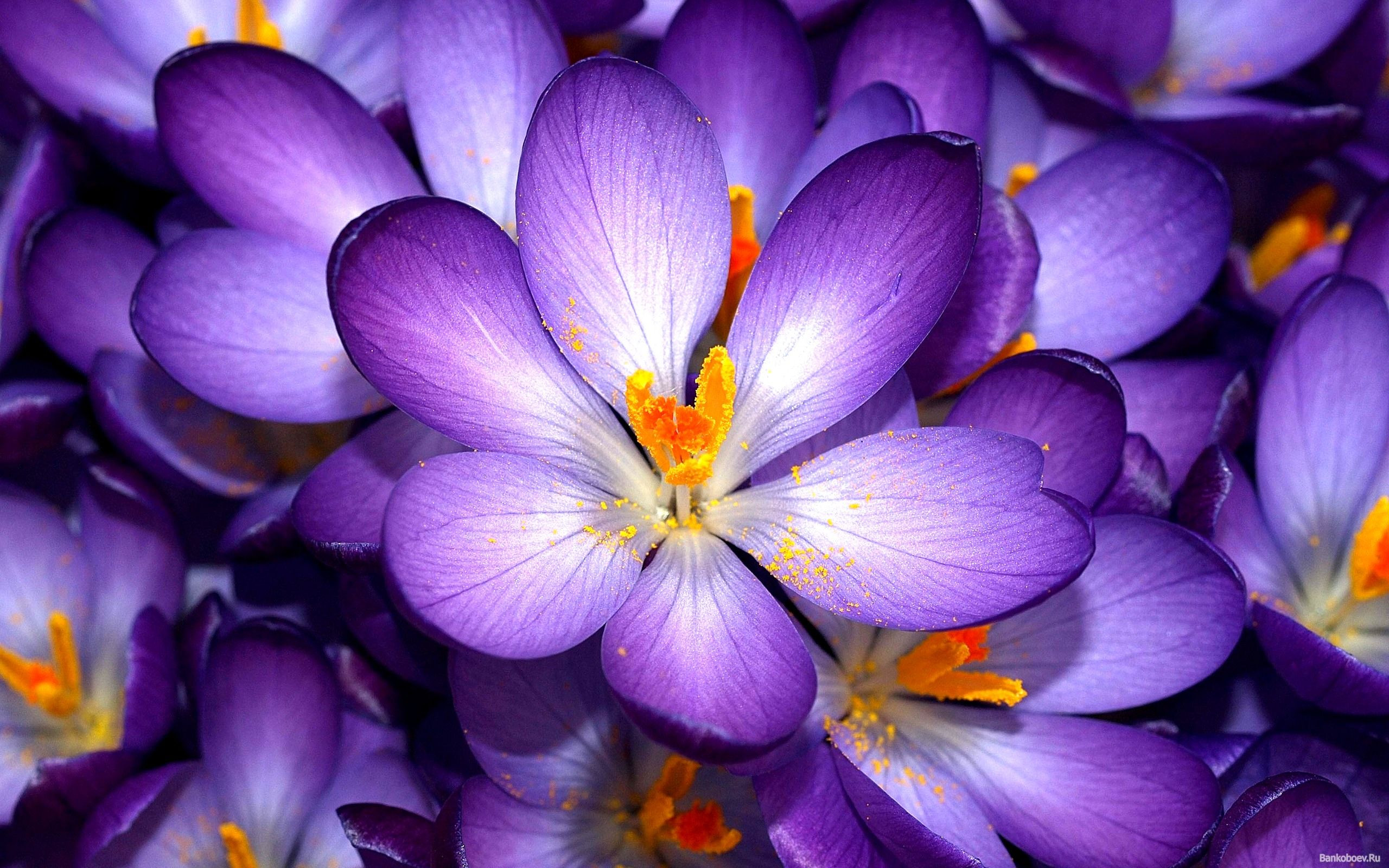 I d love to have a tattoo of violets in memory of my grandmothers