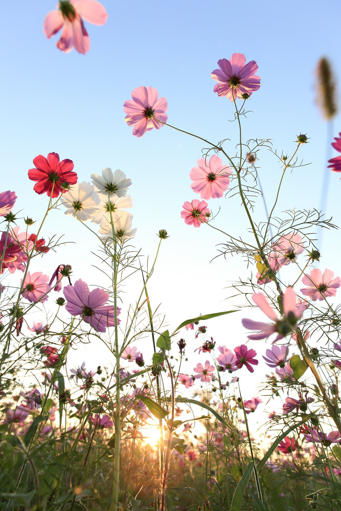 Flower Up Blue Sky Flowers Daisy Wallpapers Size for HD
