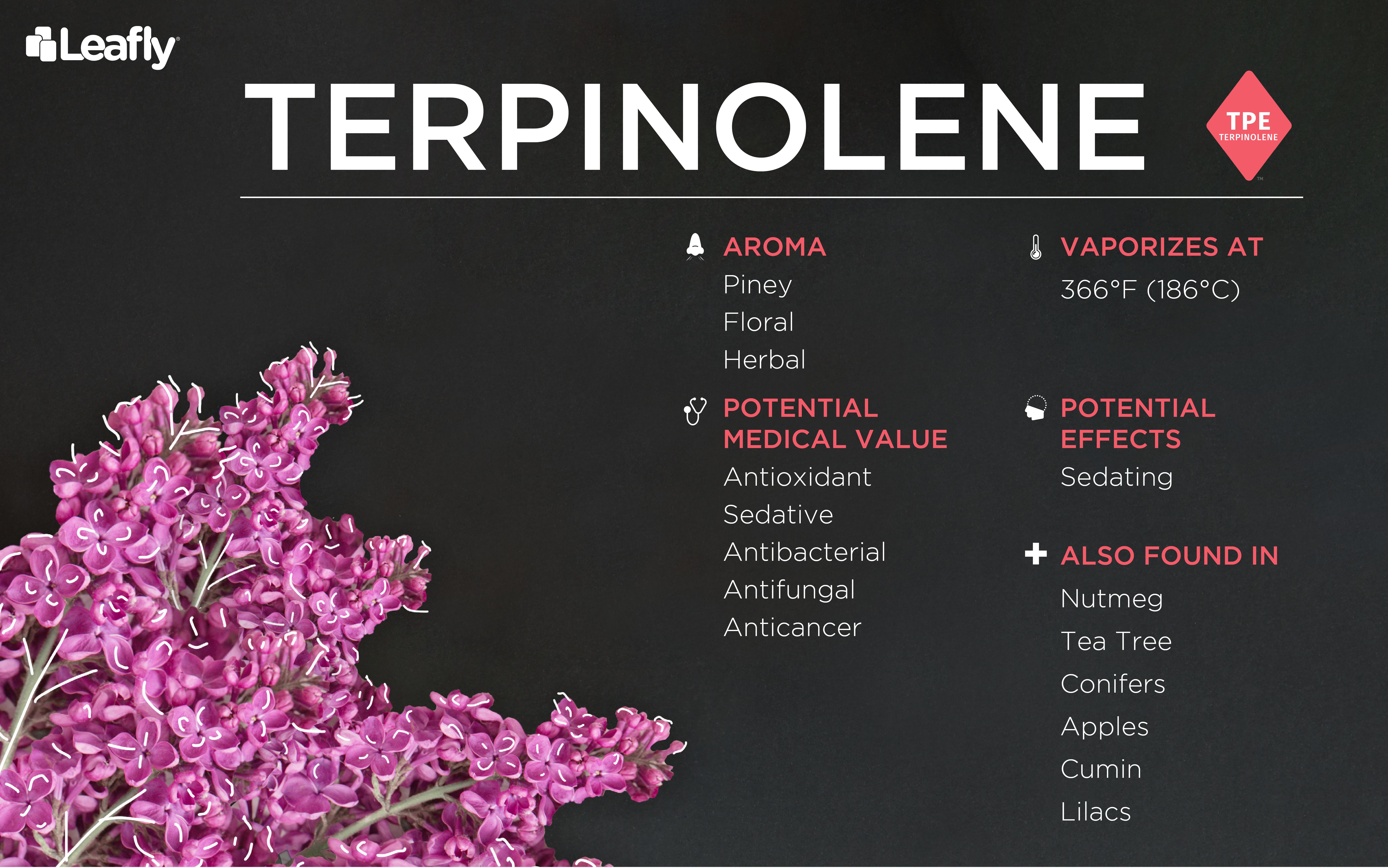 weed terpene terpinolene