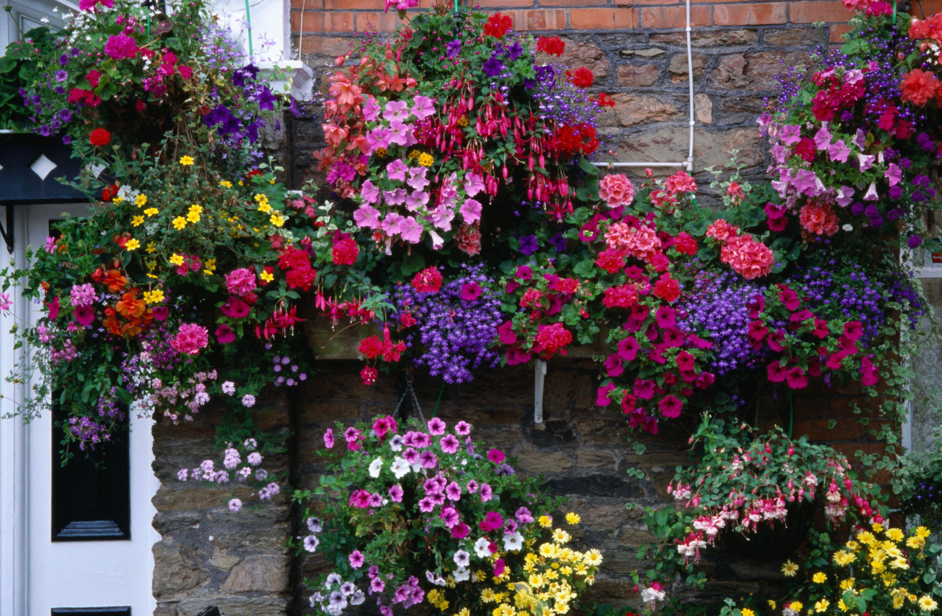 flowerhangingbaskets 5911f1123df78c9283a09ff4