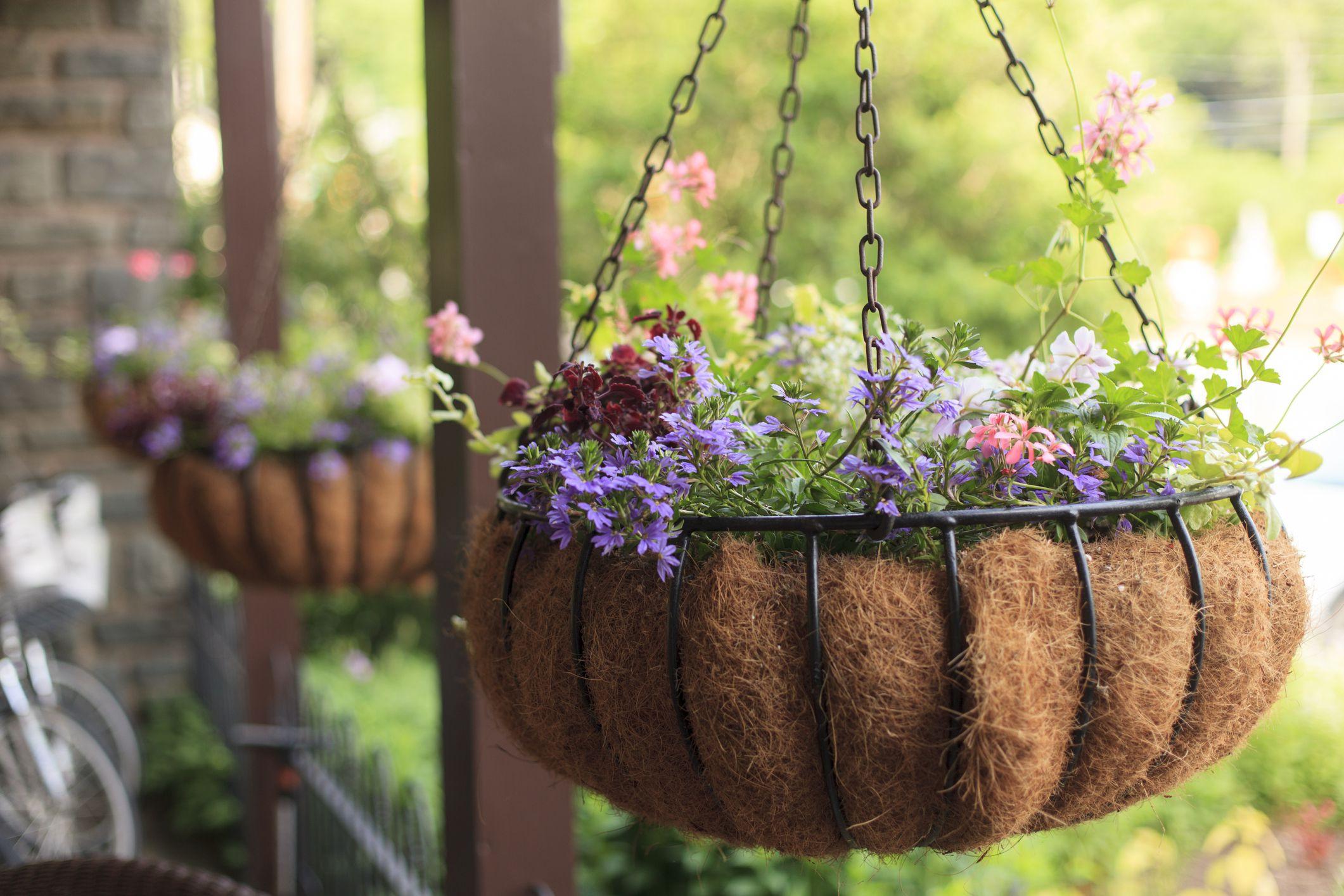 Hangingflowerbasket Getty 5a1e2fad482c f