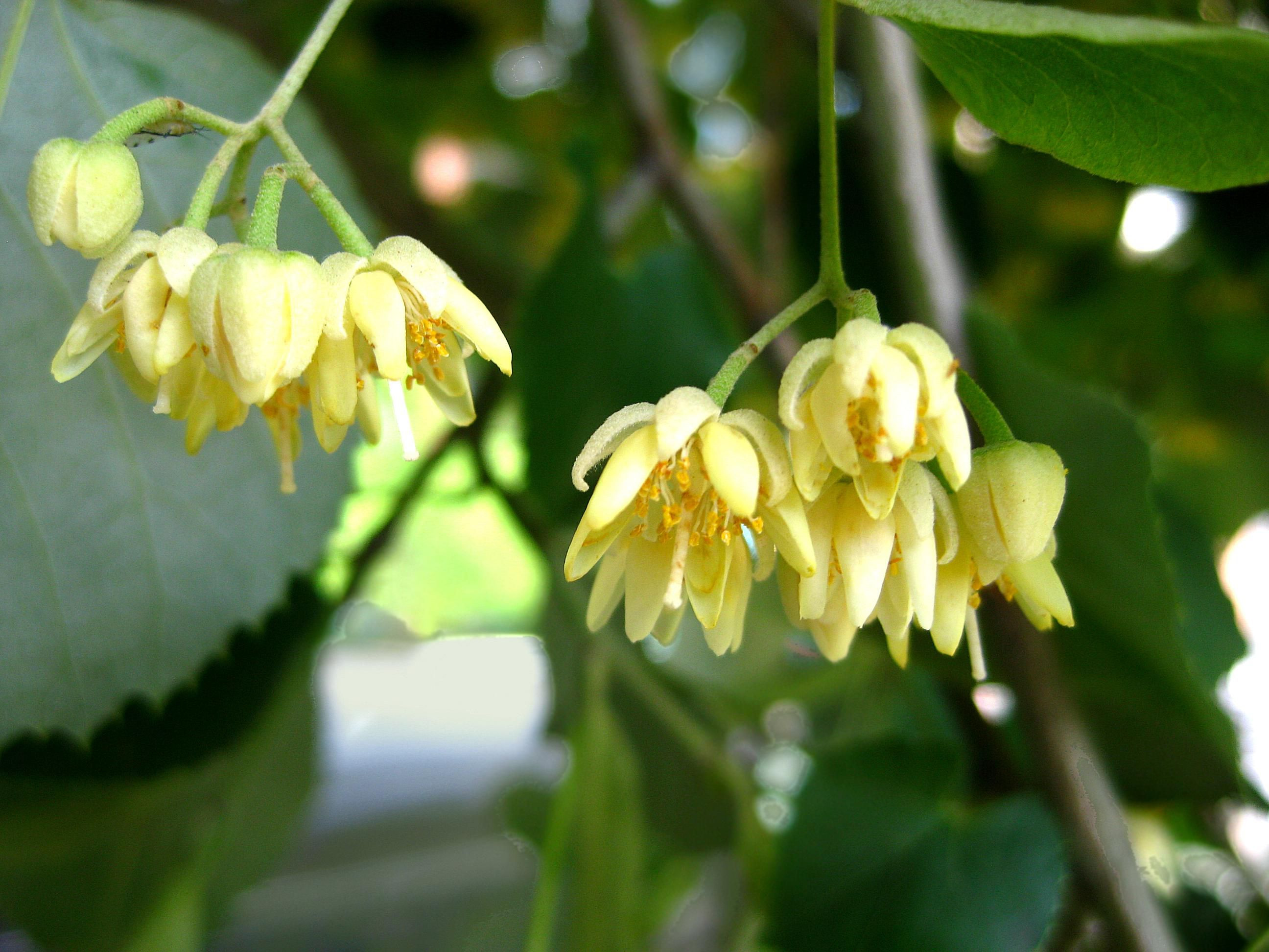 Best Flowers to attract Bees New 10 Best north American Trees for Bees