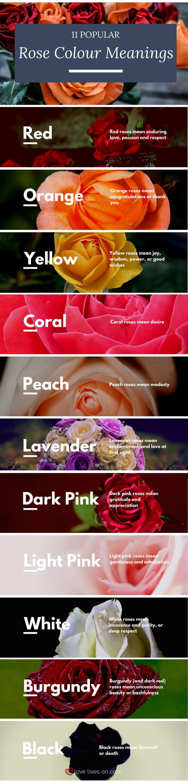 Bring even more meaning to your funeral arrangements by knowing the colour meanings of roses with this infographic of 11 popular rose colours & their
