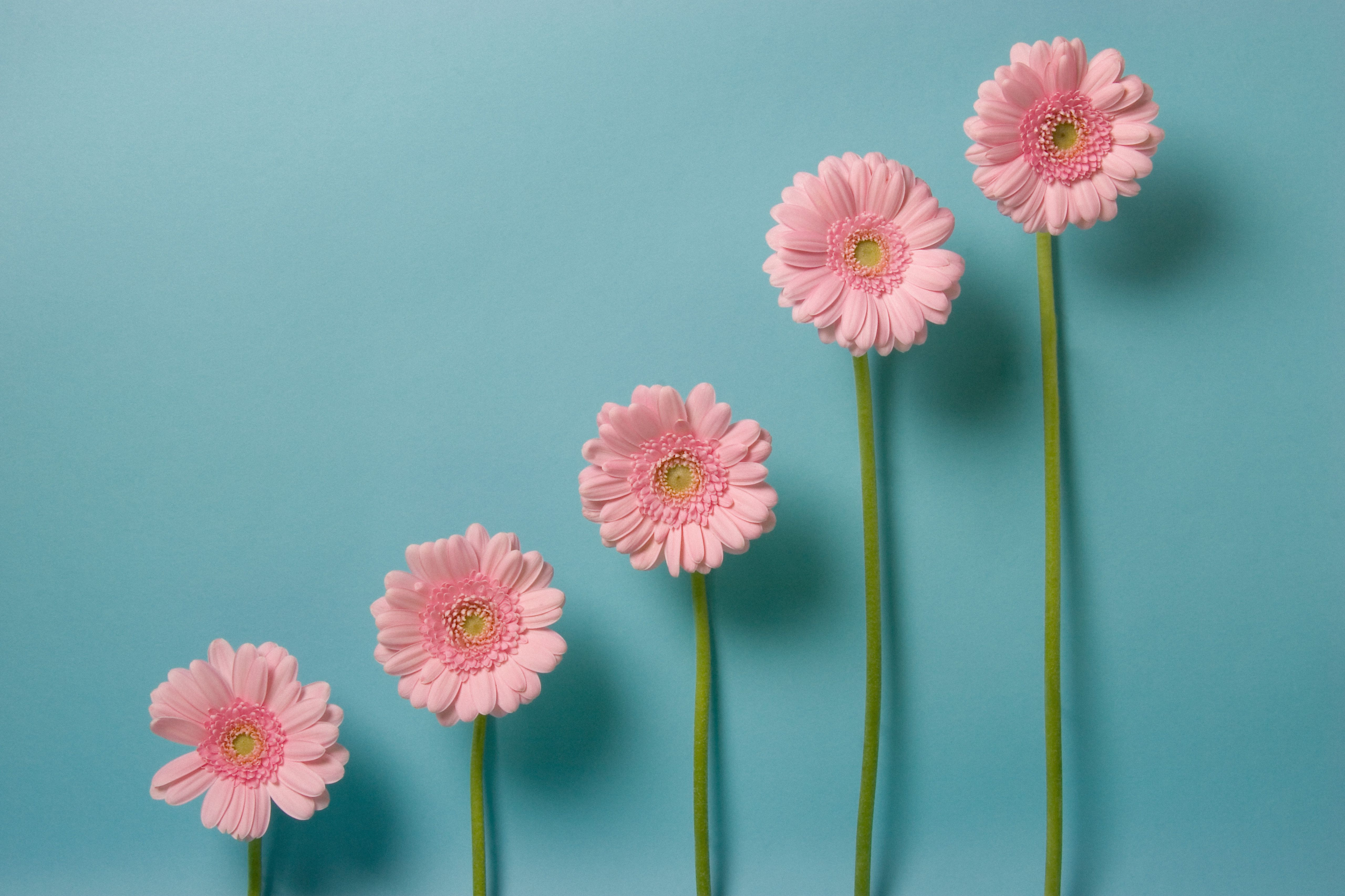 Flowers of different heights