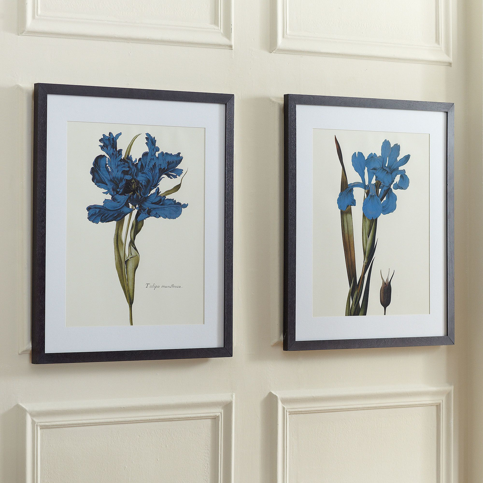 Blue Iris Framed Print II