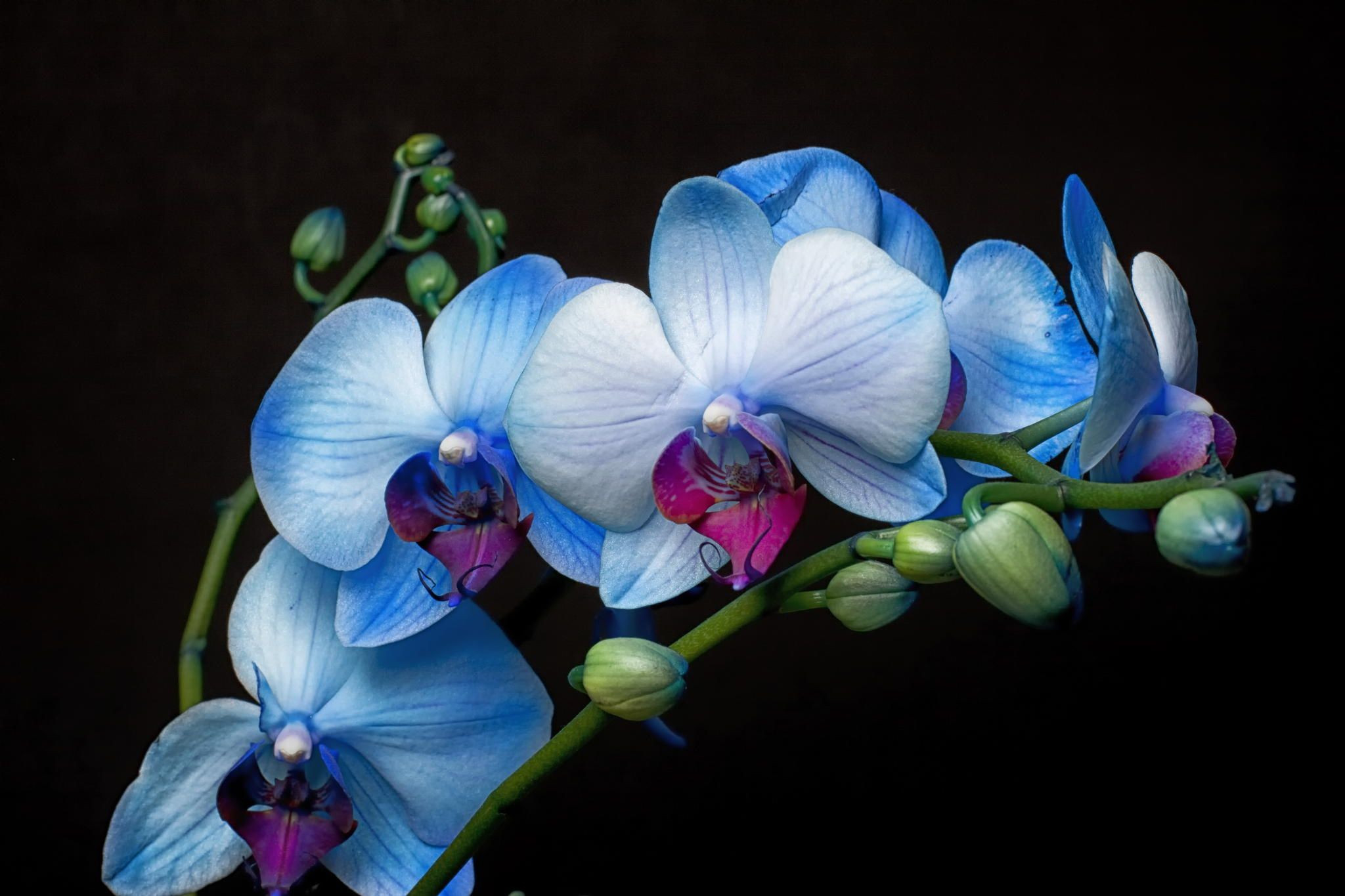 Blue Orchids by Chris Miranda on 500px