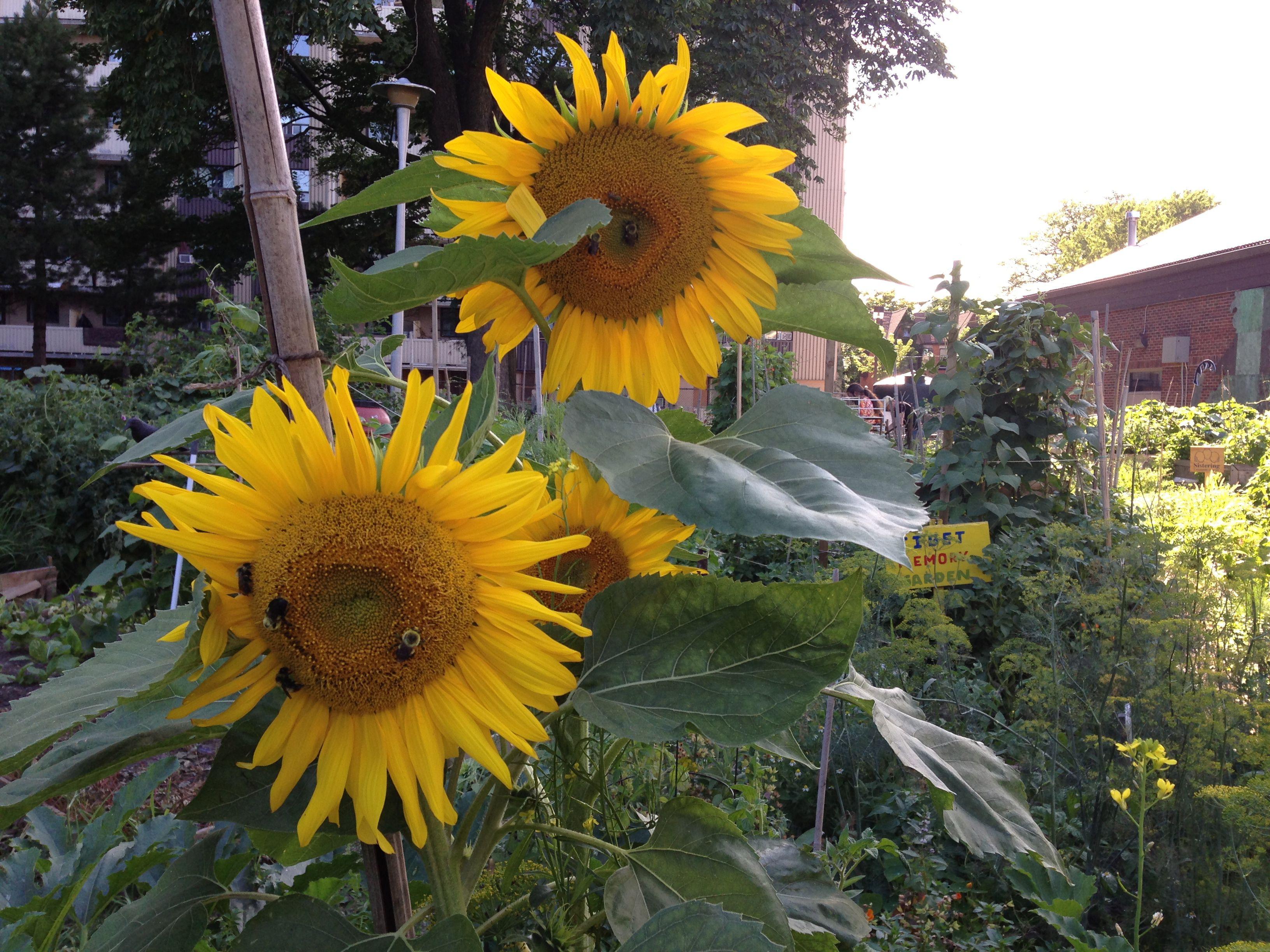 hope garden 574c df78ccee e