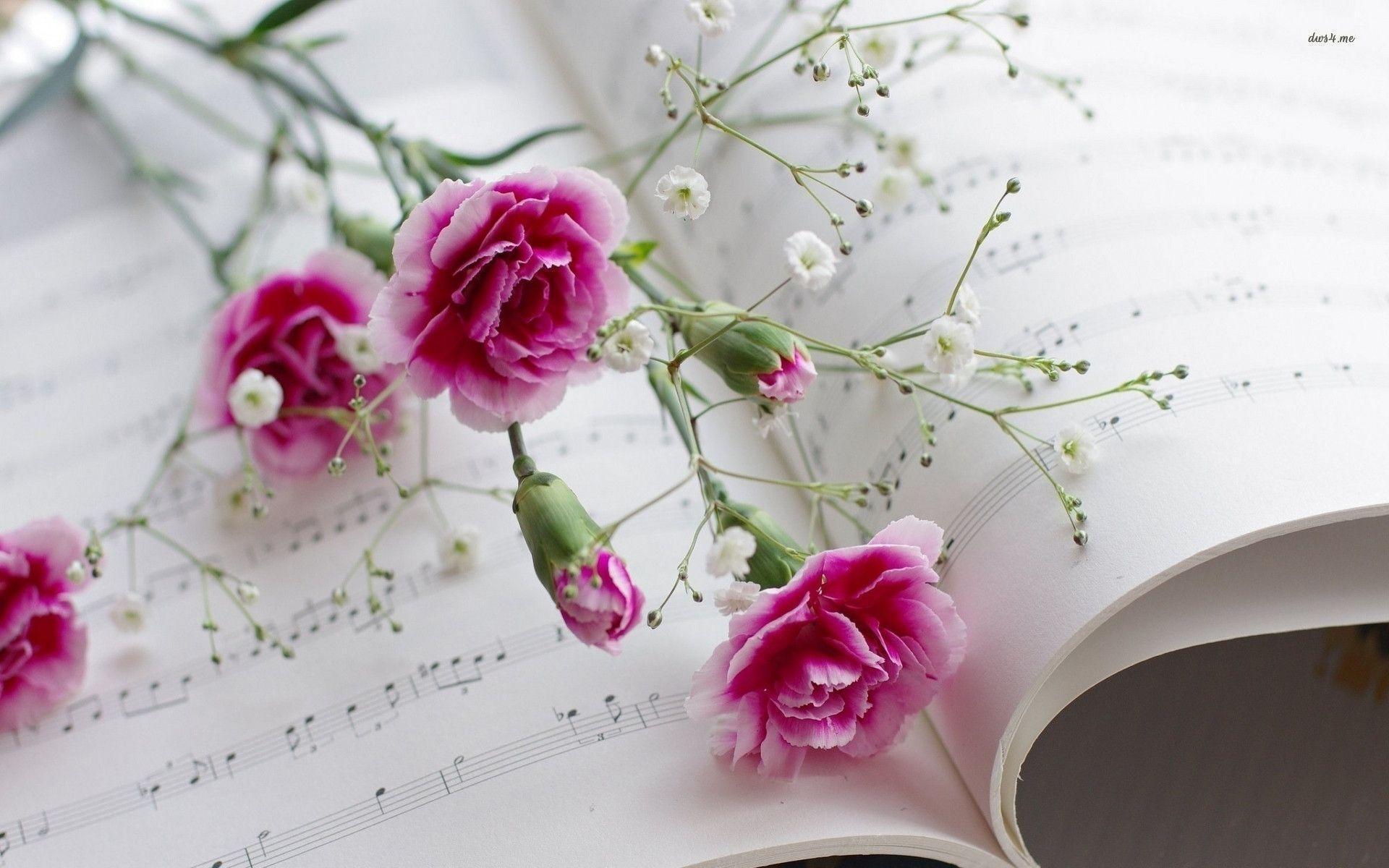Pix For Pink Carnation Flower Wallpaper
