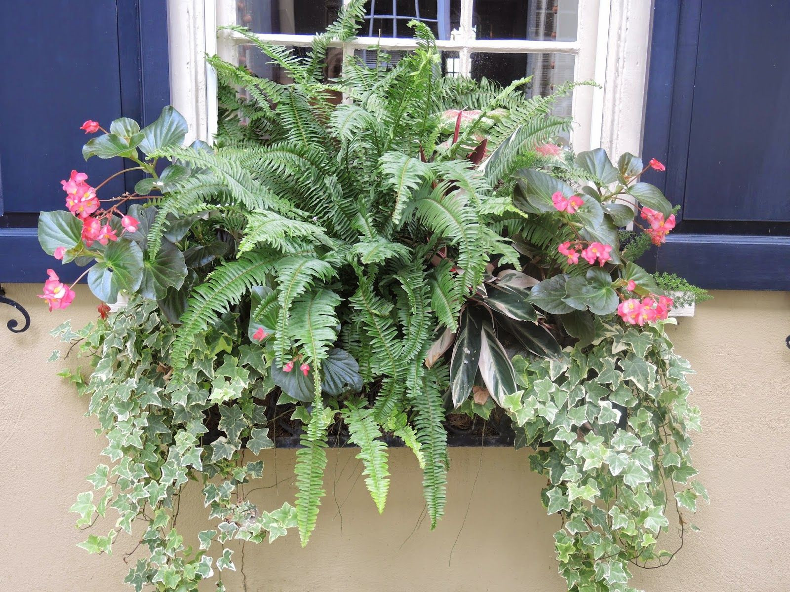 shade window box begonias ivy ferns Flower window box planter for shade Pink and green for southern warm climate window box easy planting