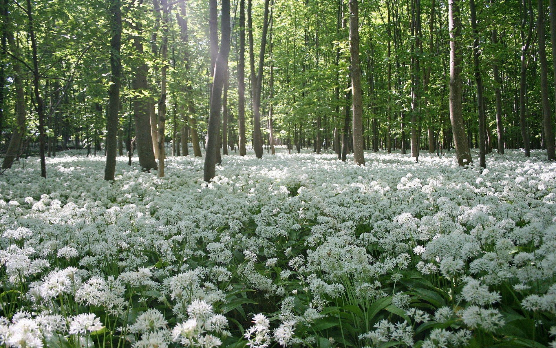 Forest Flowers Field