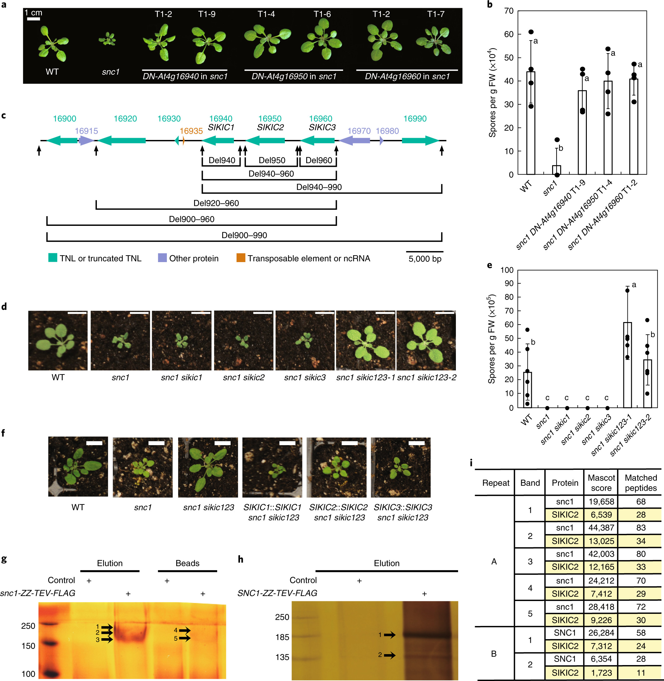 Individual ponents of paired typical NLR immune receptors are regulated by distinct E3 ligases