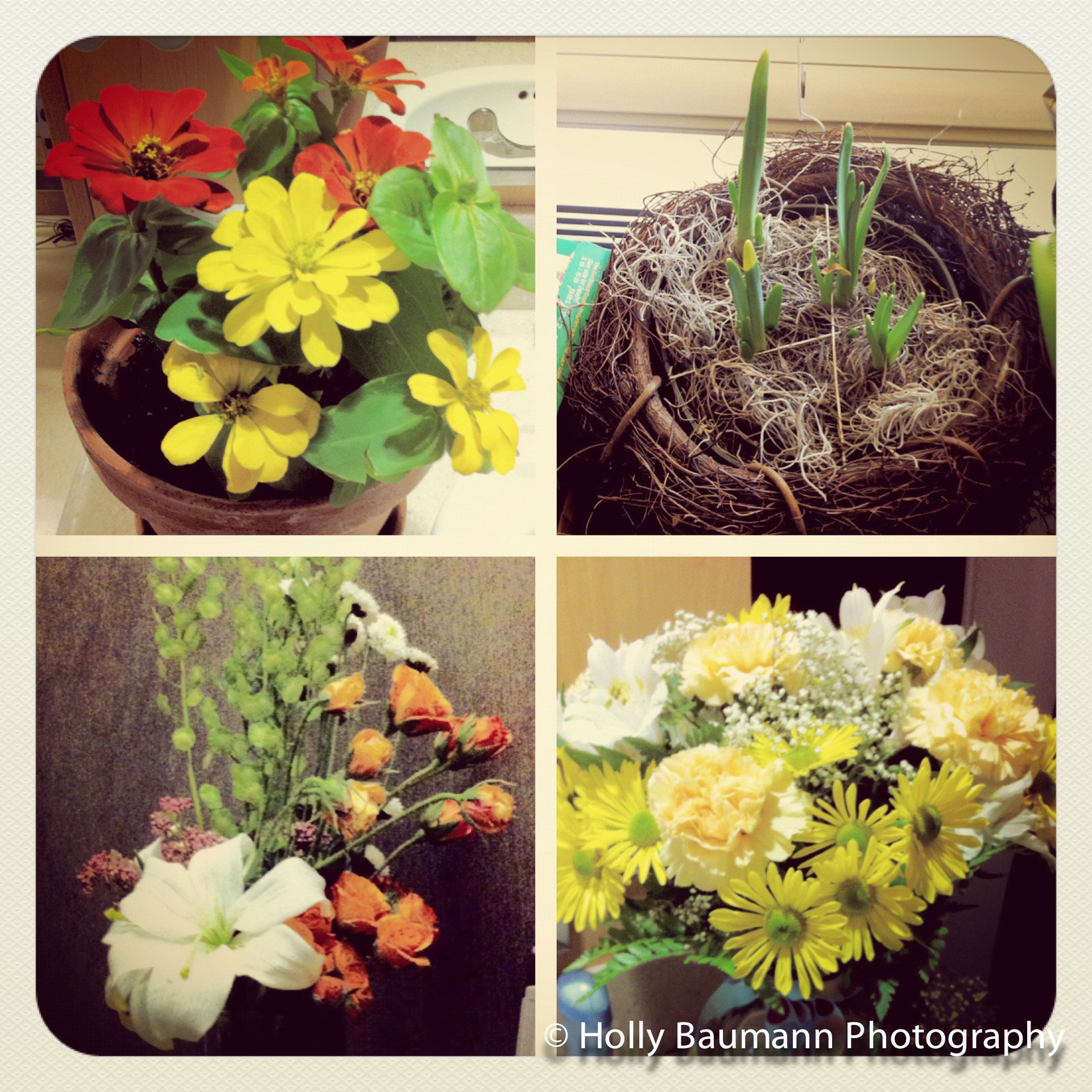 Some of the flowers