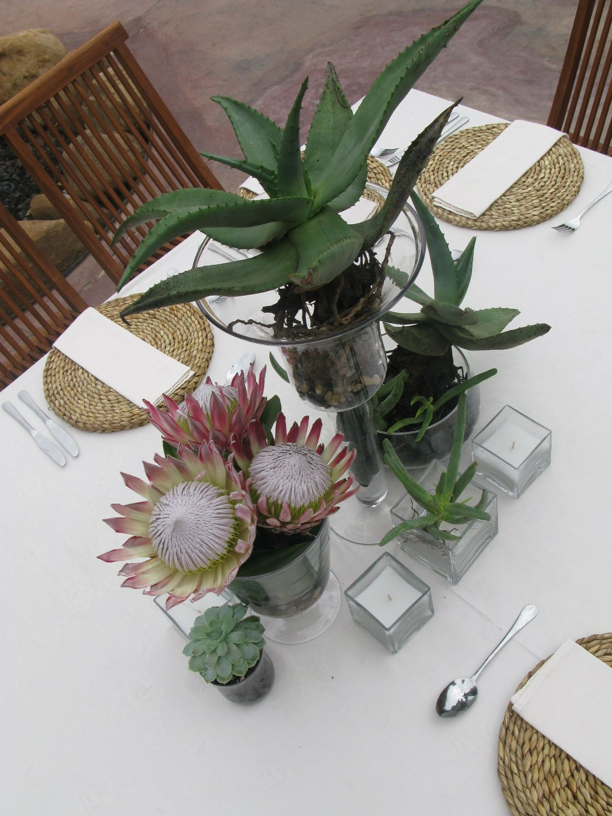 Succulent Aloes and Protea s
