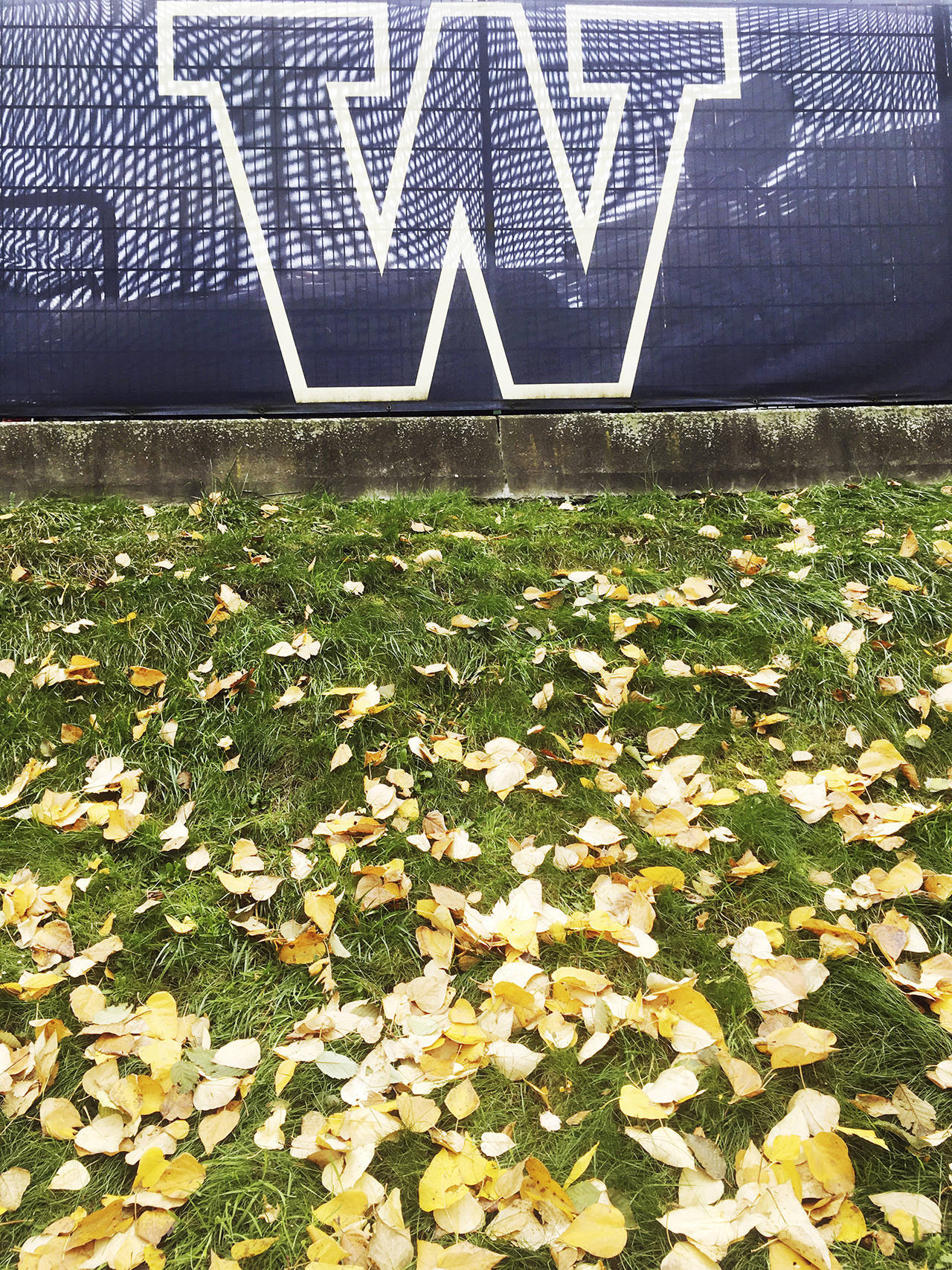 This photo shows the University of Washington campus in Seattle in the fall of 2017