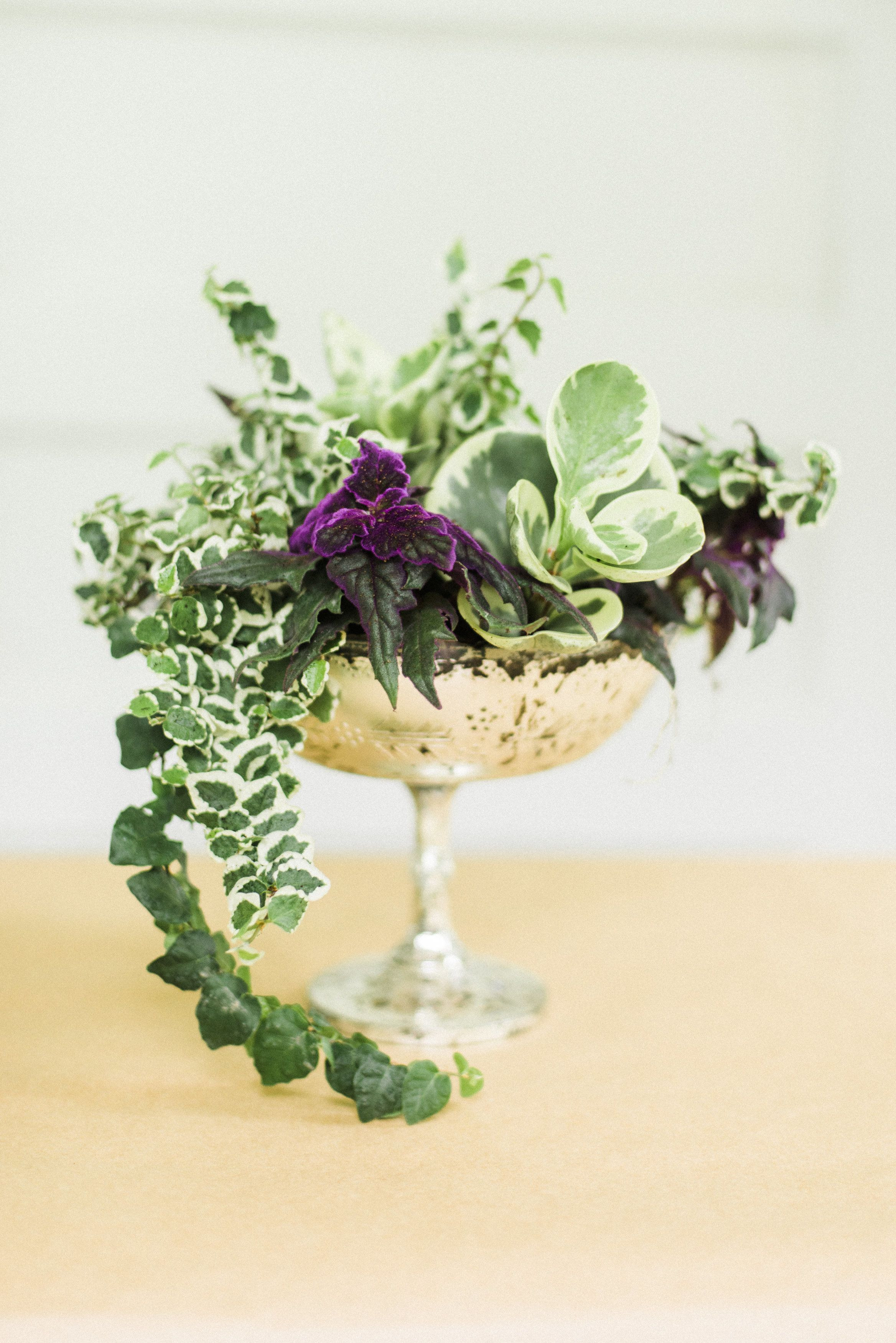 Lovely Dish Gardens eco friendly centerpieces and t for lucky guests