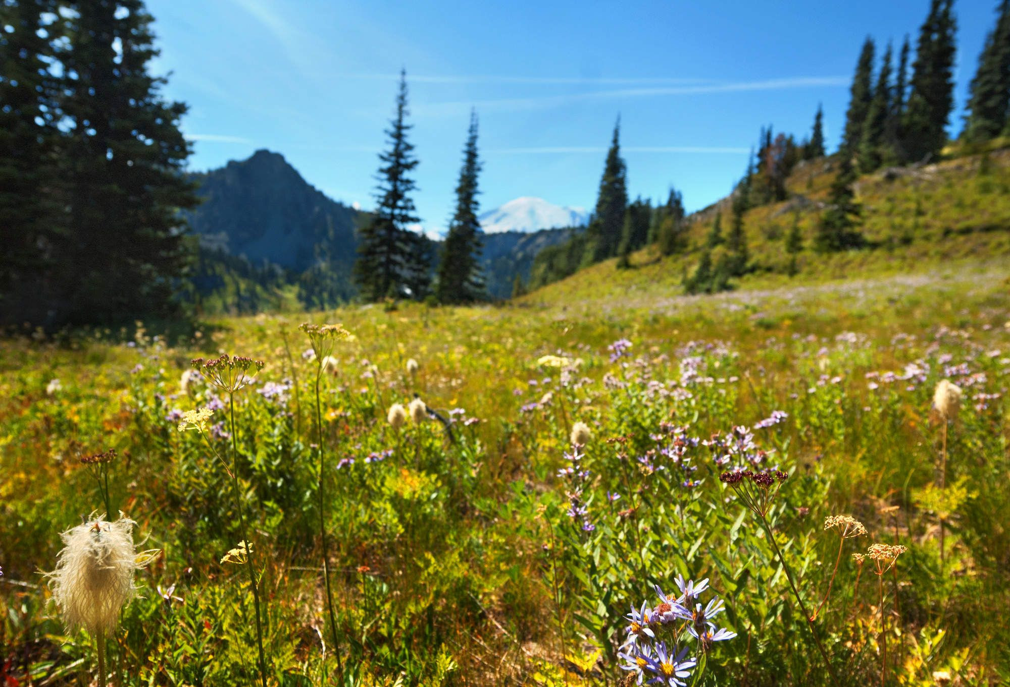 Screw Mount Si Try These 9 Underrated Seattle Hikes Instead