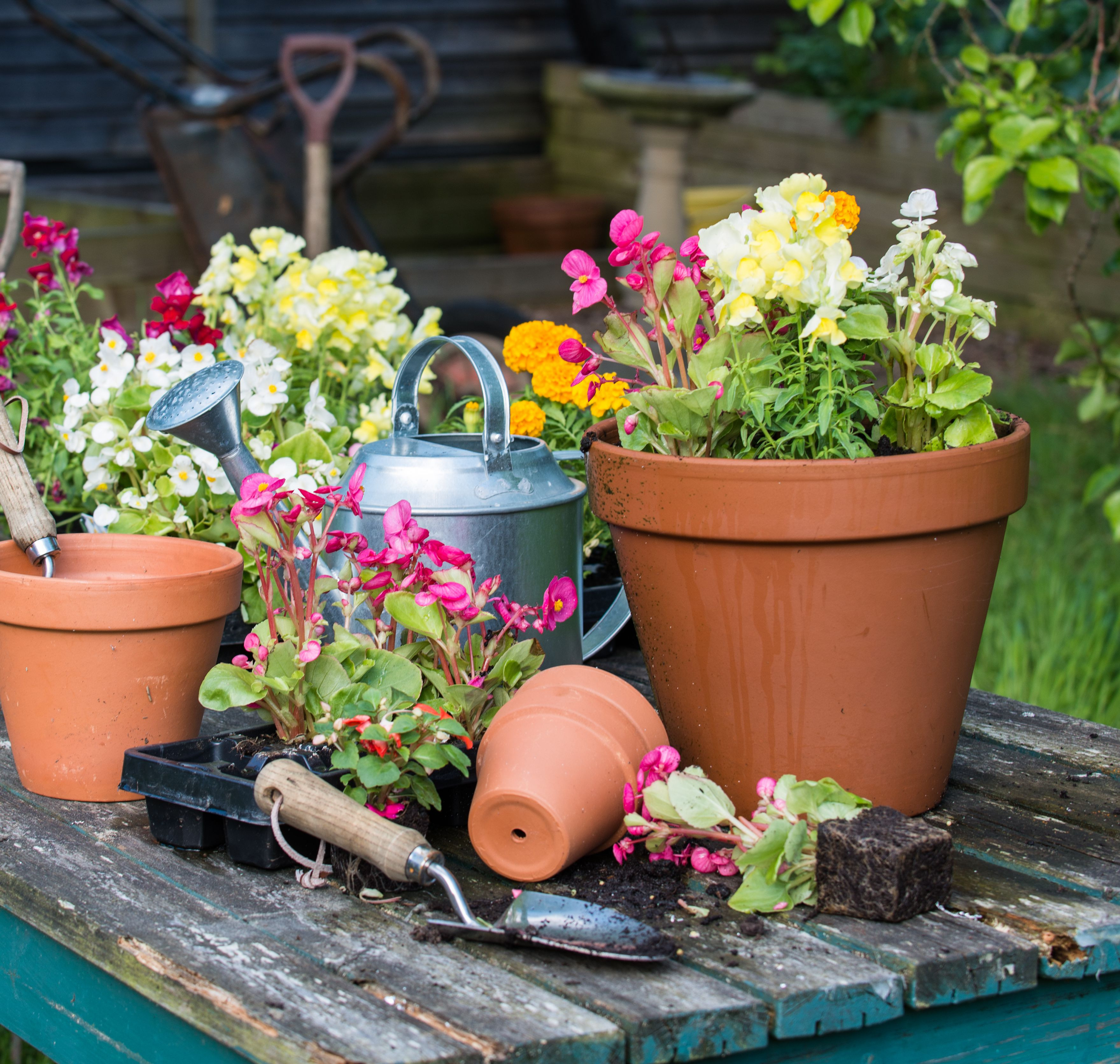 Flower Delivery Kitchener New Flower Garden and Gardening Care and Tips