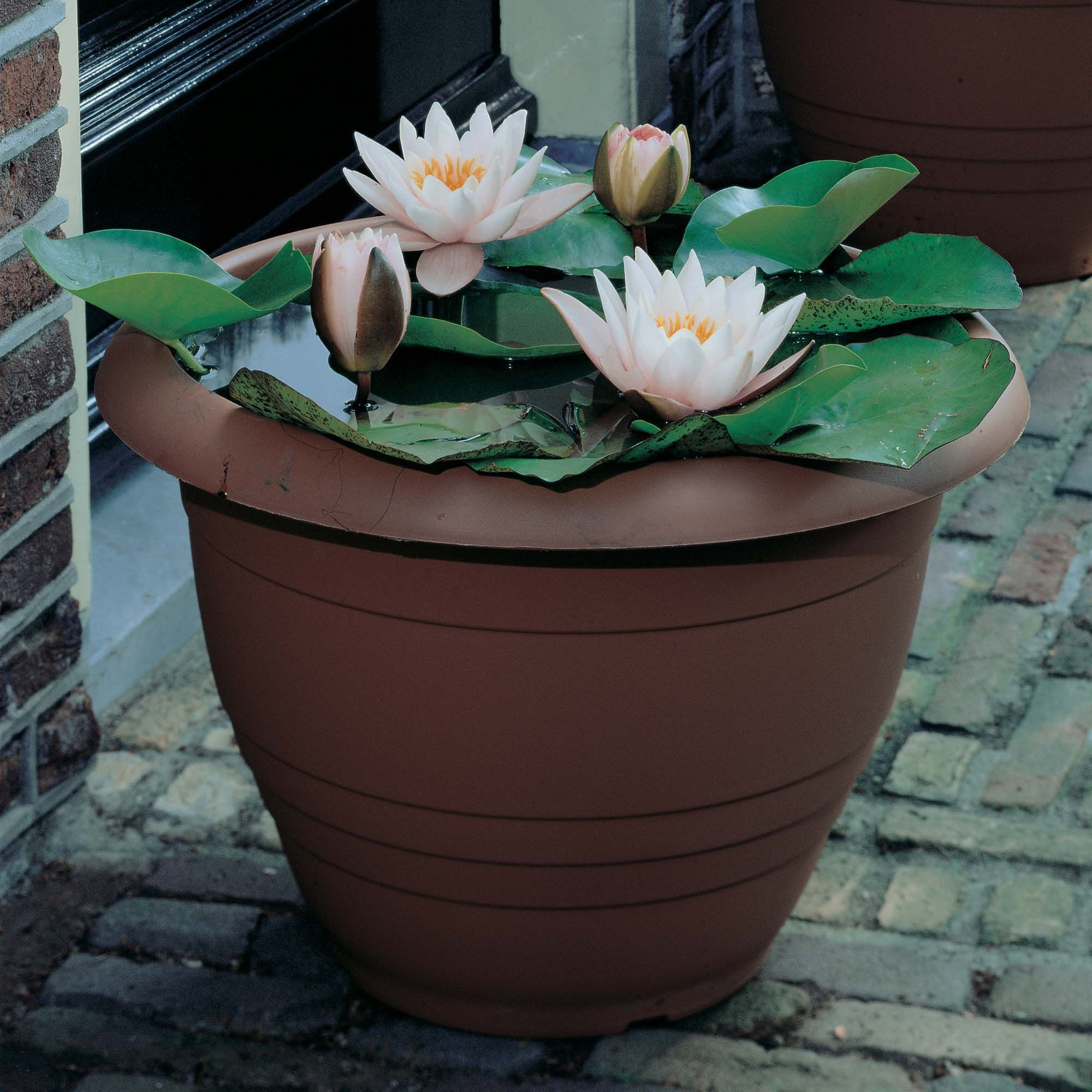 Cheap dollar store planters can be transformed into a haven for water lilies and lotus flowers Some are so cheap they don t have drain holes so they re
