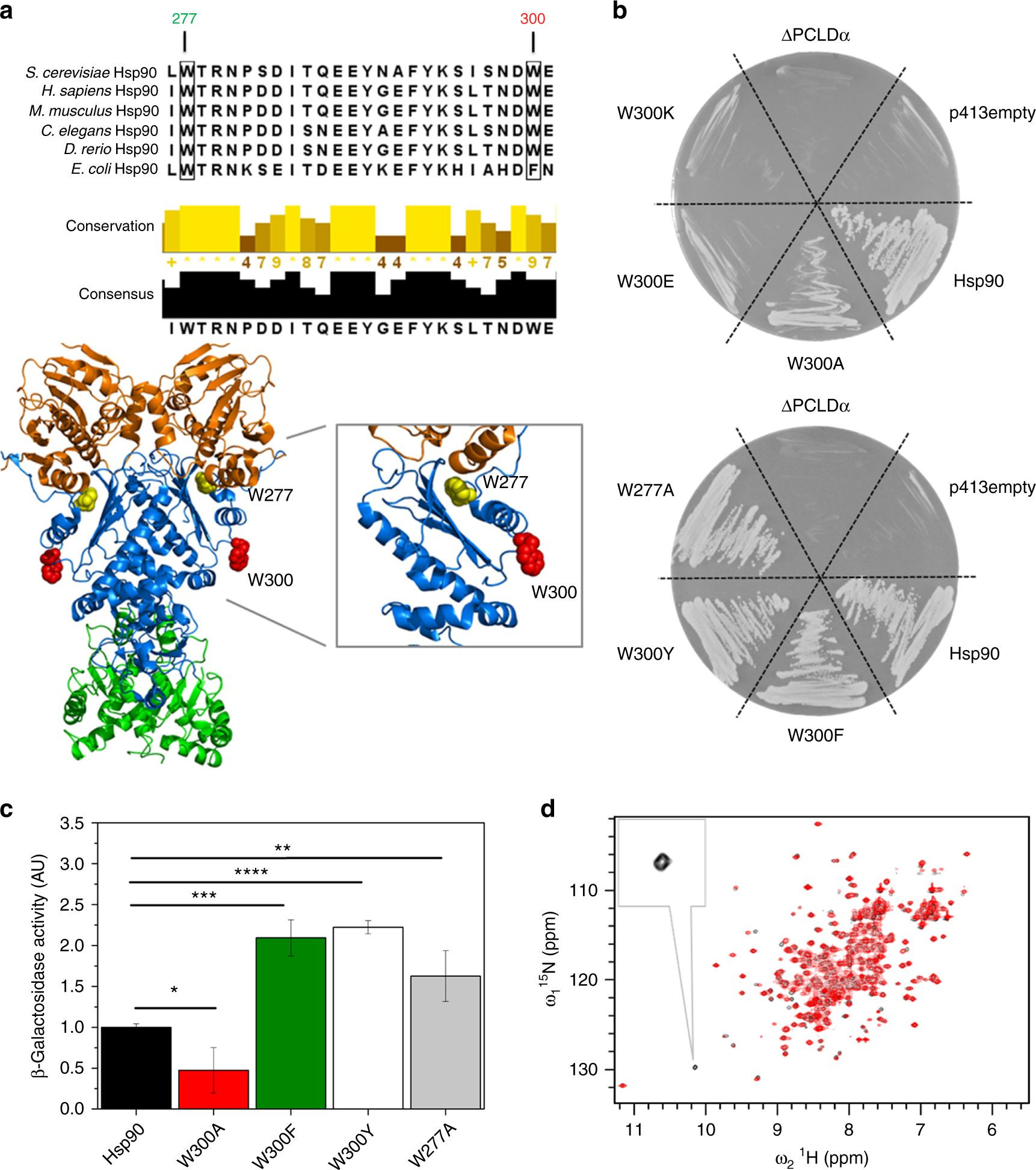 A switch point in the molecular chaperone Hsp90 responding to client interaction