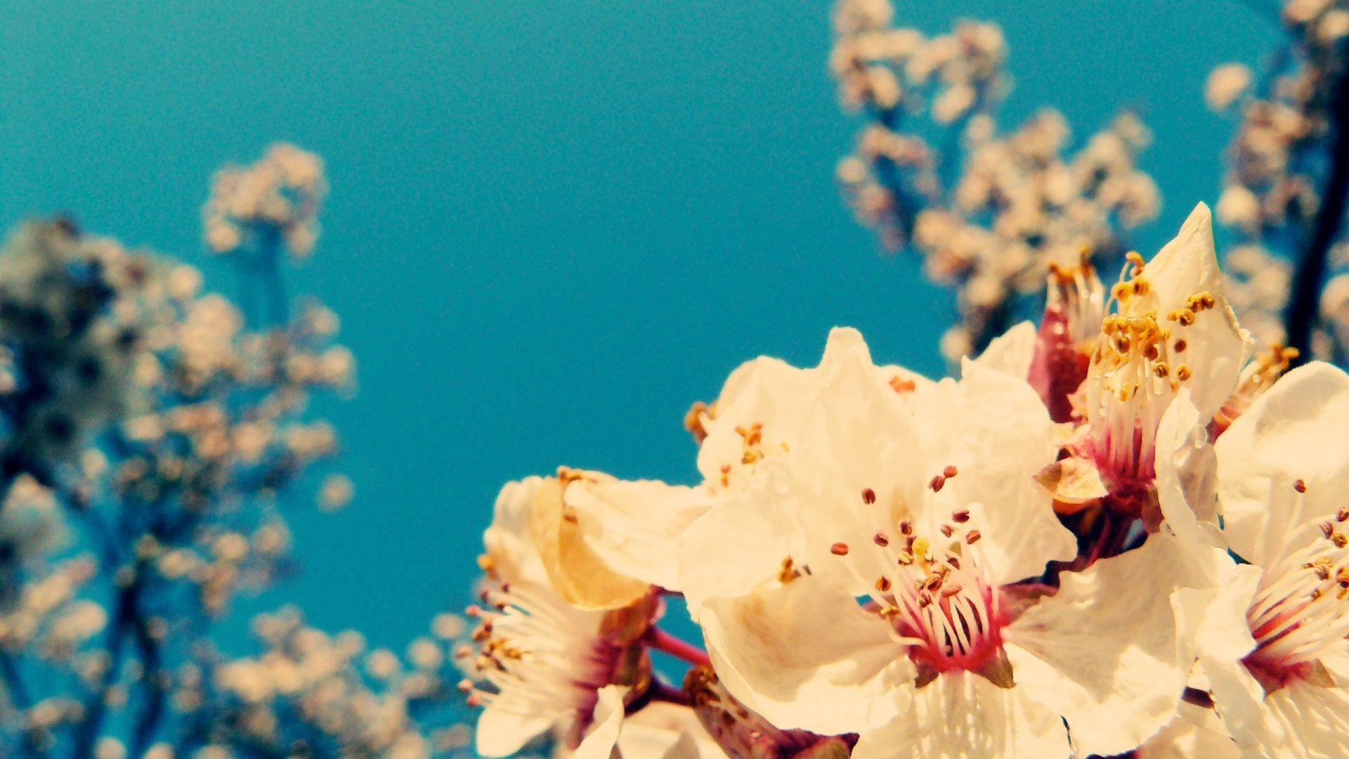 Image for Vintage Flower HD Wallpaper Desktop