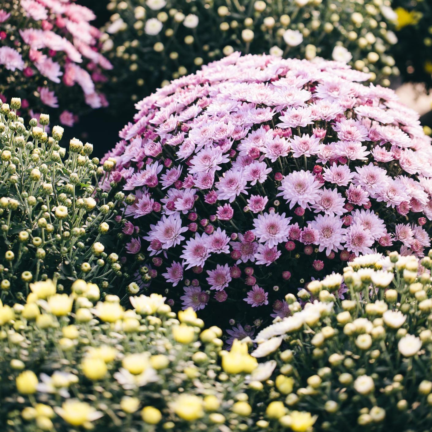 List of Flowering Evergreen Shrubs