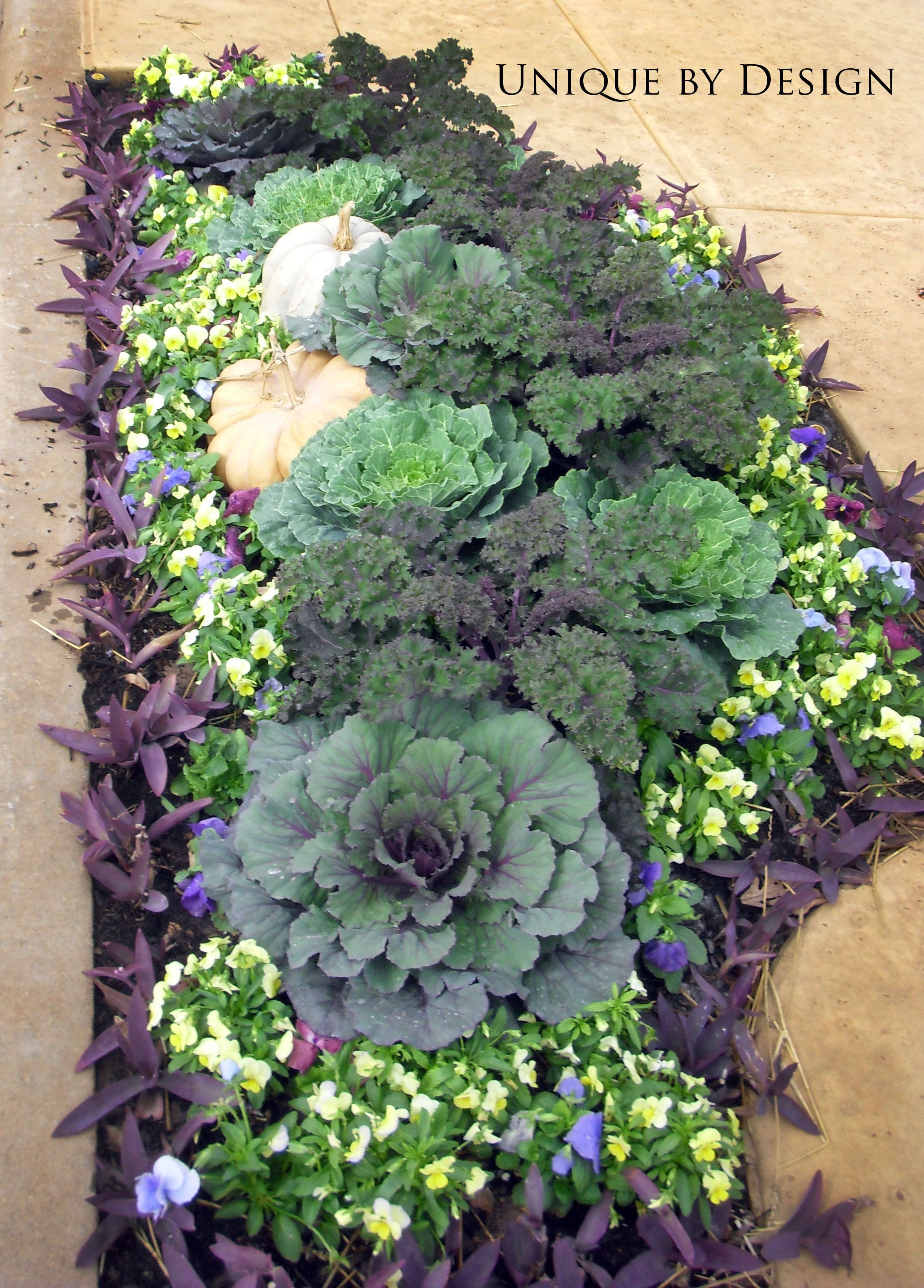 Ooooo pretty Myers Plants & Pottery has their winter cabbages in Must some