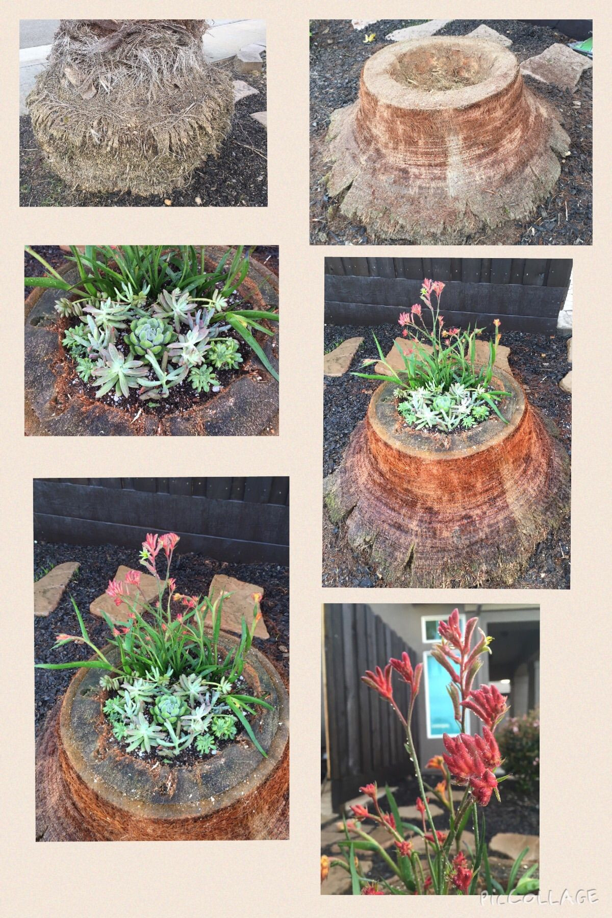 It started as a dull palm tree stump and turned into a beautiful succulent creation