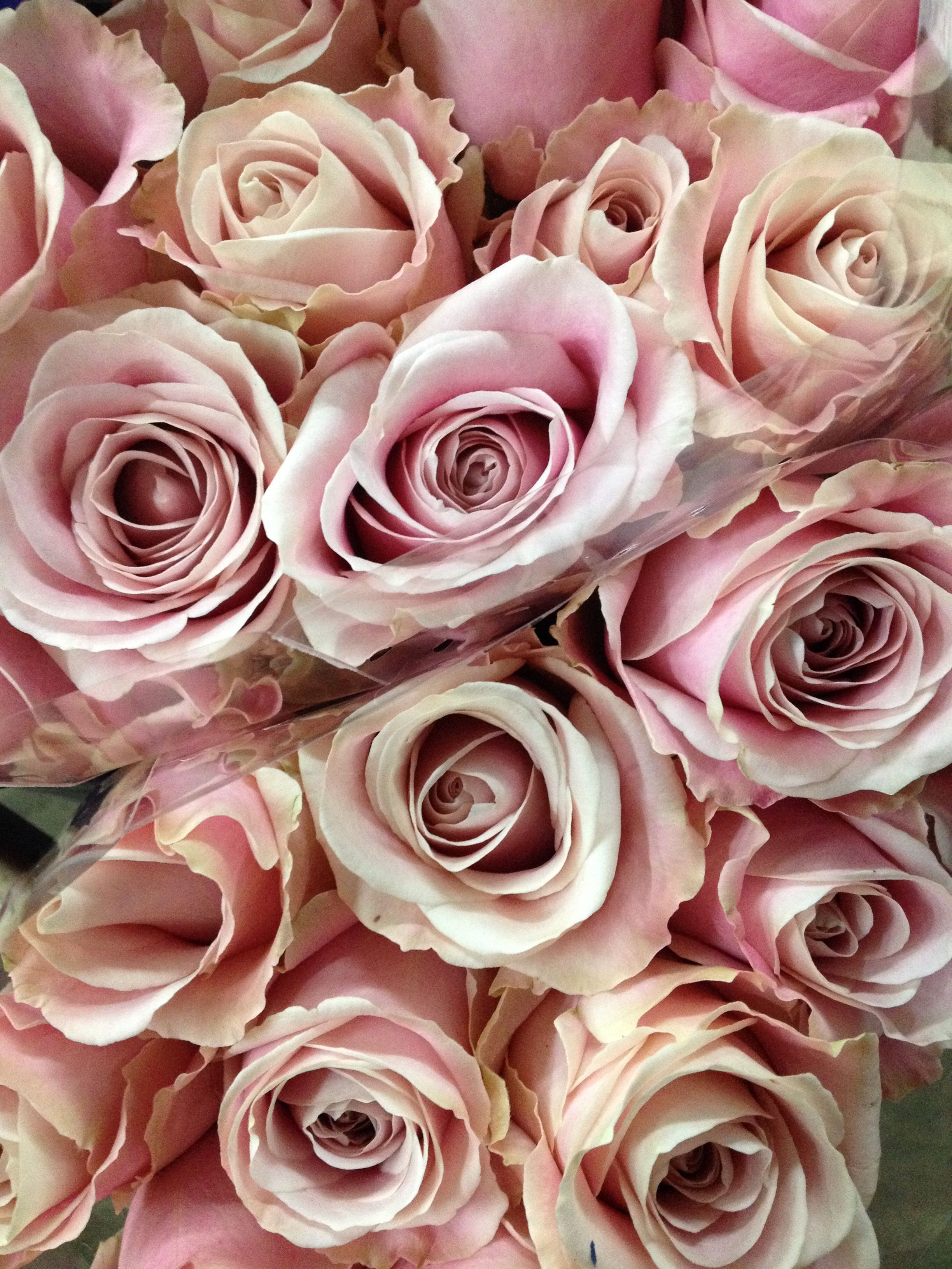 Sold in bunches of 20 stems from the Flowermonger the wholesale floral home delivery service