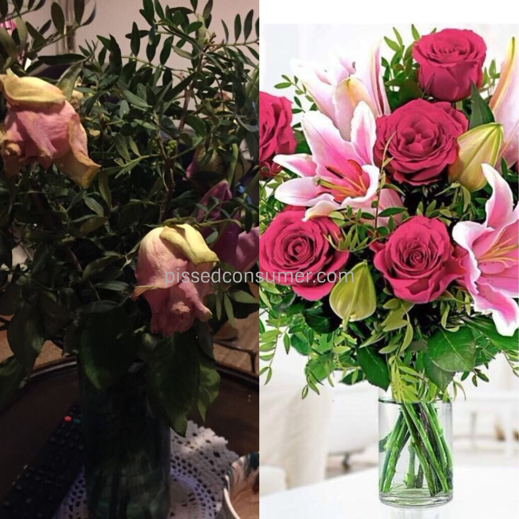 Flowers Online Reviews Fresh No Lilly S Just One Small Bud which Never Flowered Just D