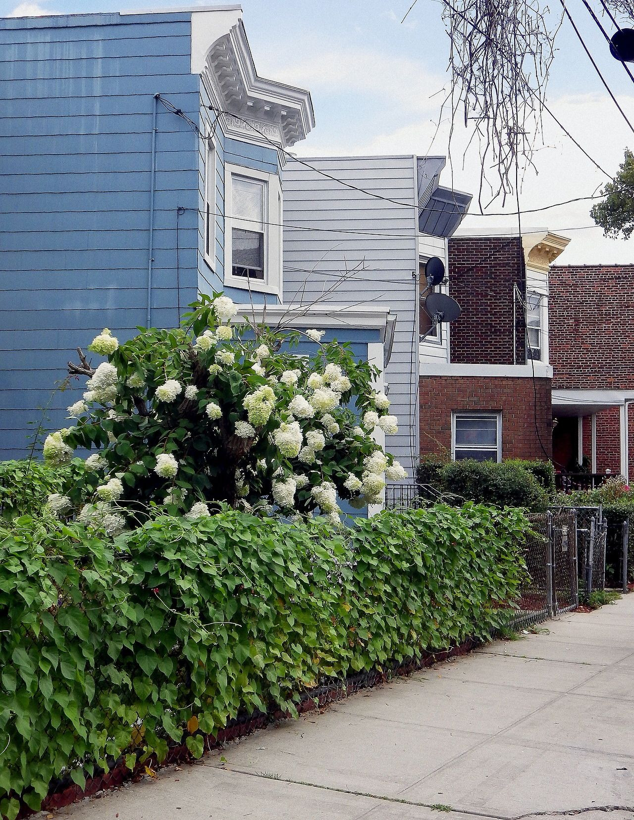 Houses and flowers in Woodlawn Heights the Bronx