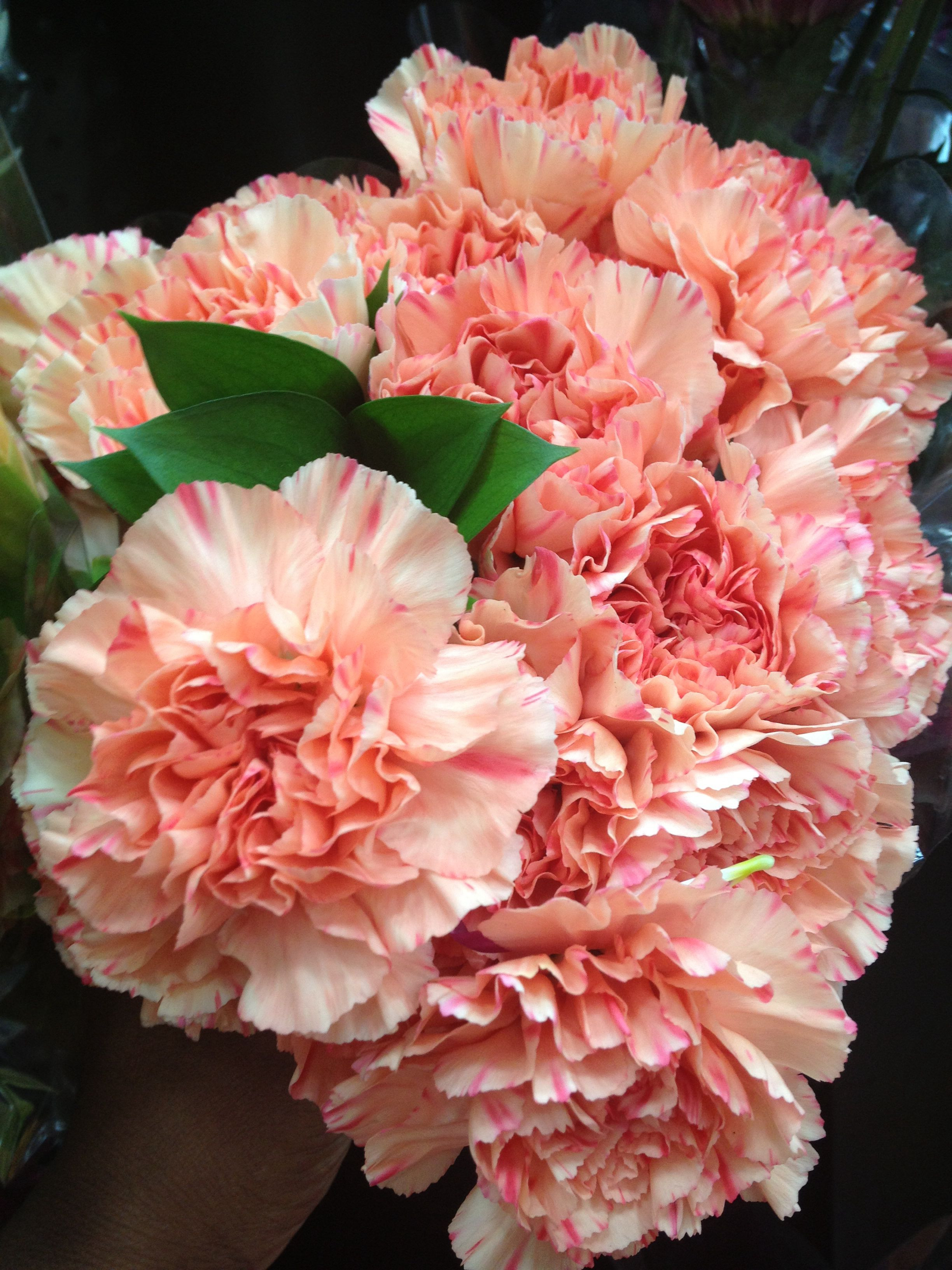 Coral Carnations from Costco