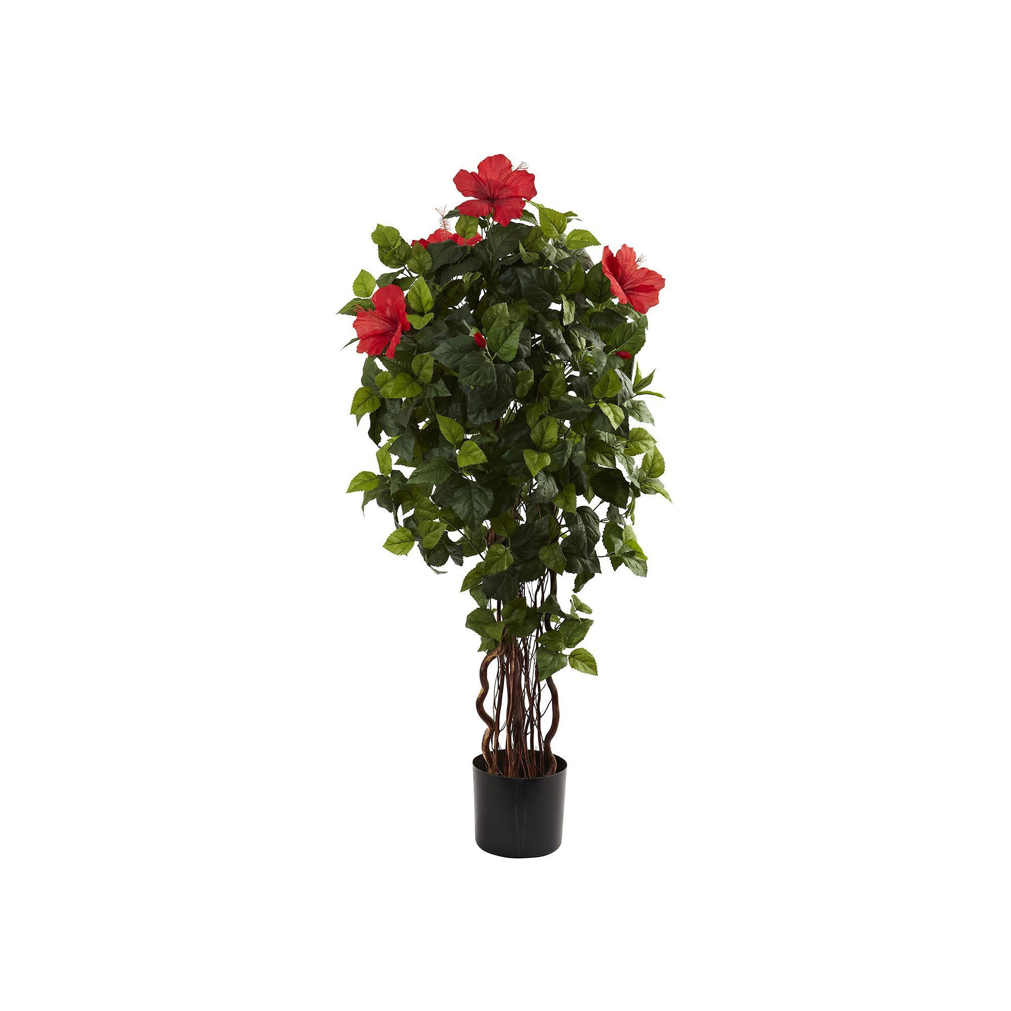 Potted Hibiscus Tree