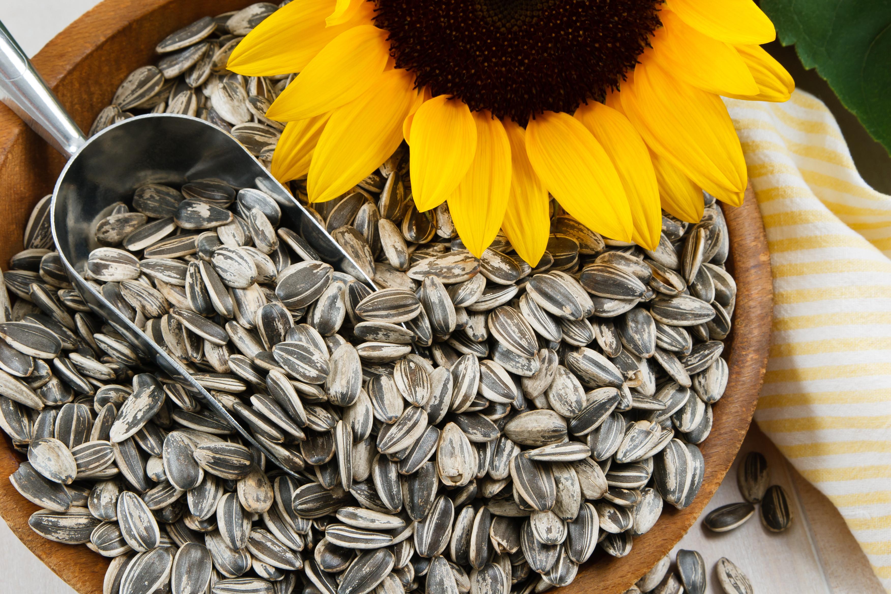 3504x2336 sunflower seeds