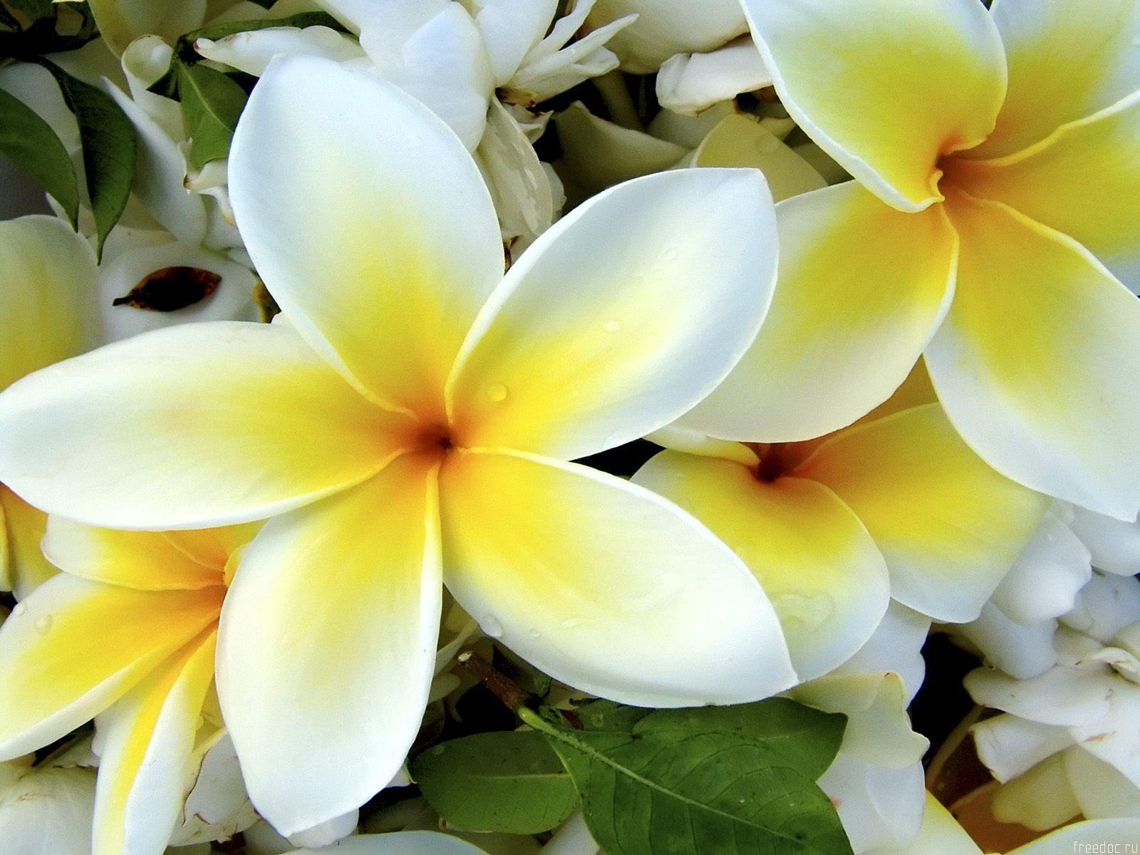 white and yellow flowers Yellow Flower Mishmash