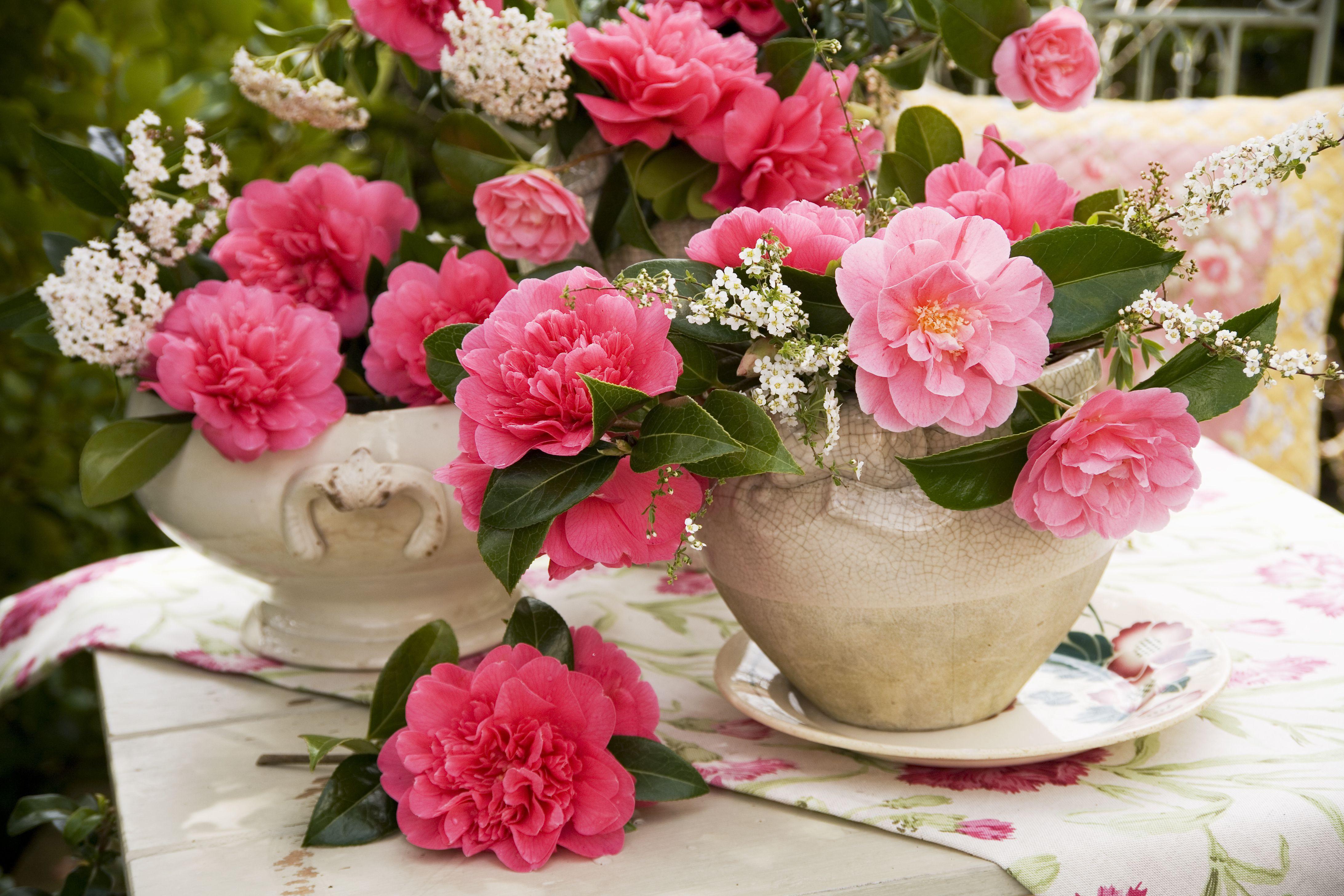 camellias 57d70ec13df78c c2f