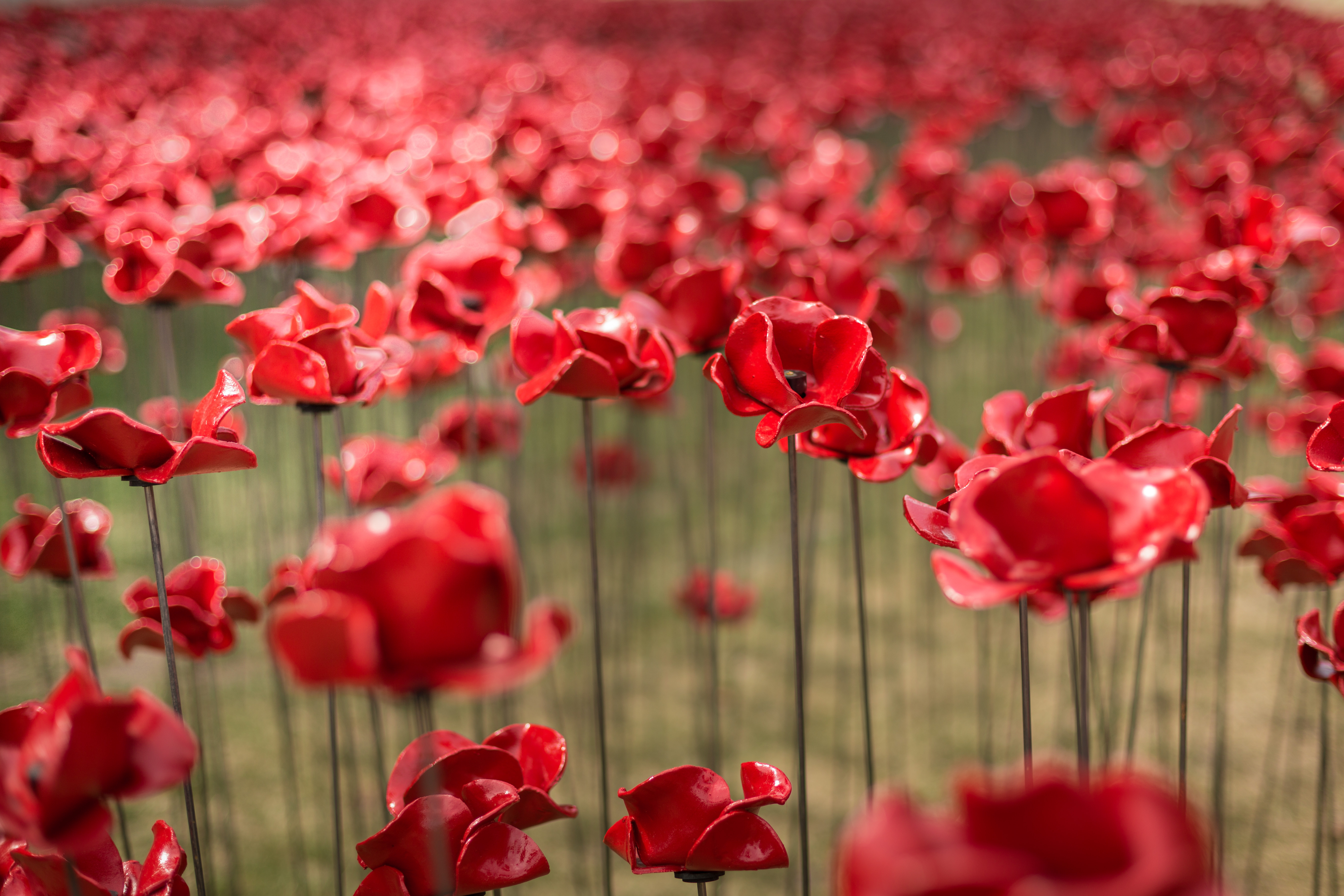 POPPIES Wave and Weeping Window