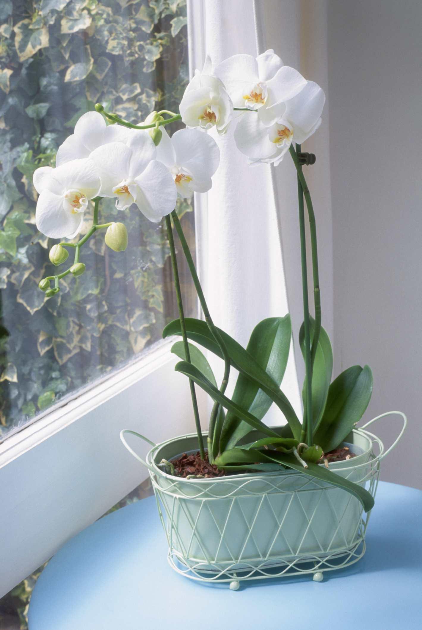 orchidwindow 573b2b2e3df78c6bb0735d58