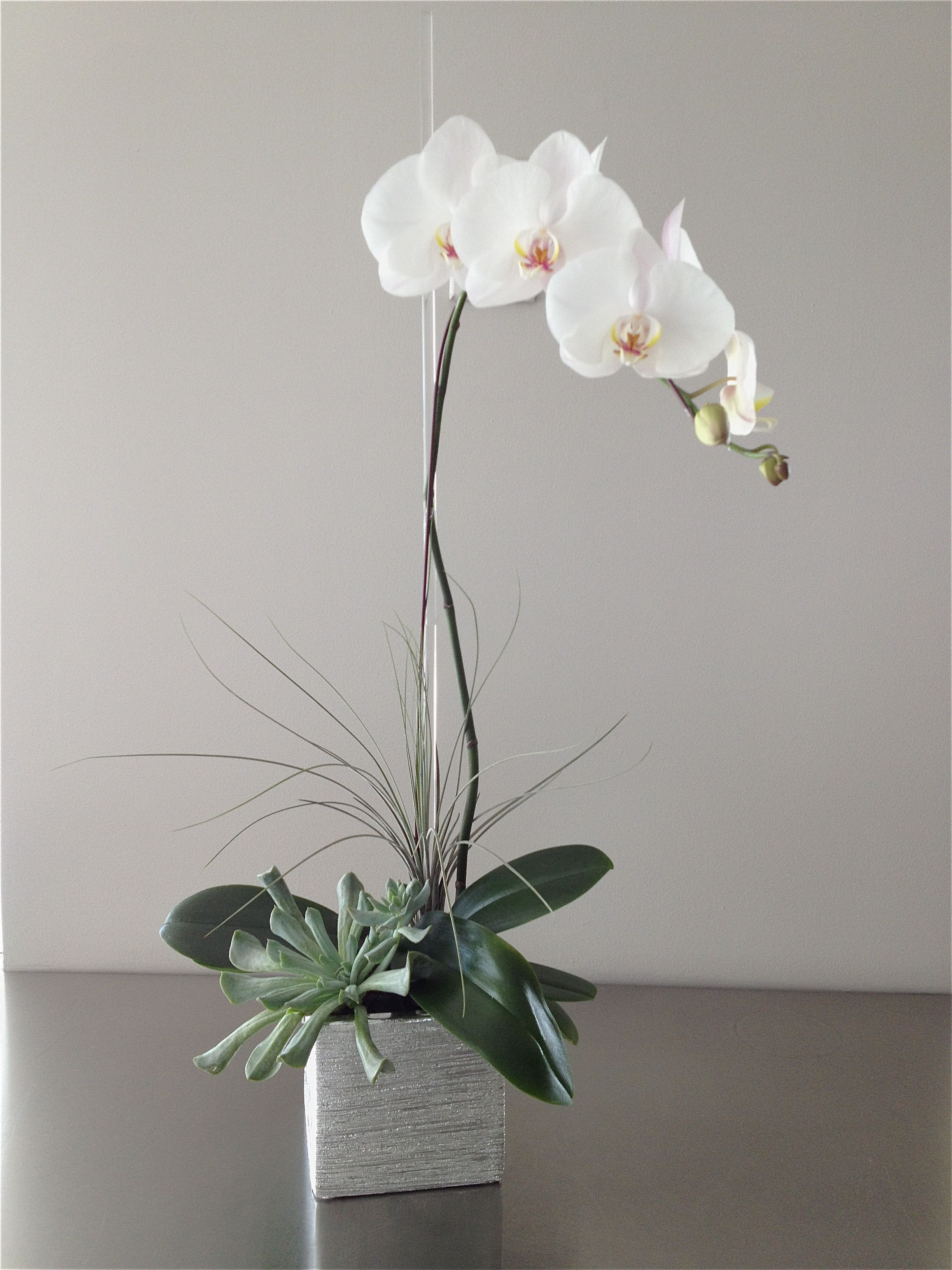 The Silver Orchid a classic white orchid plant with tropical and succulent accents in a silver ceramic