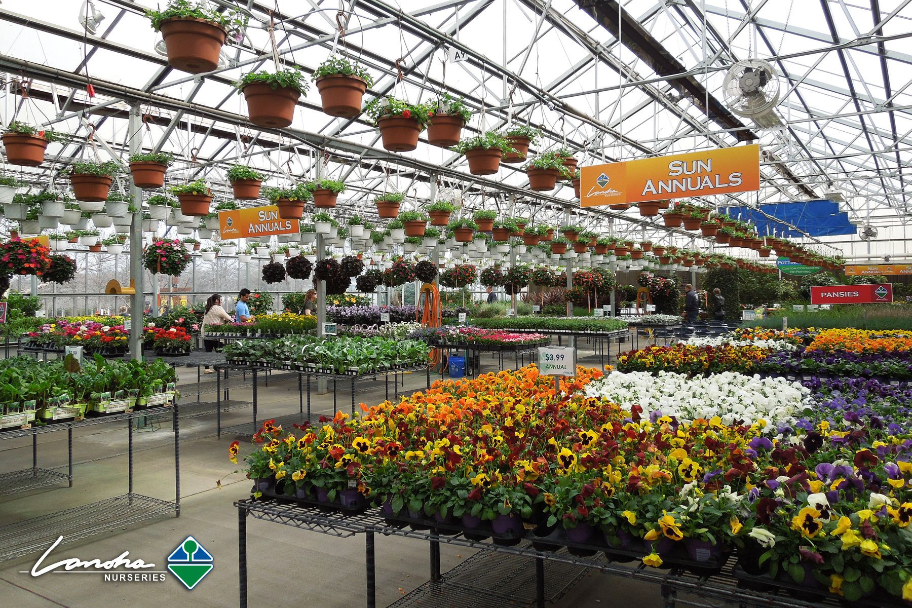 Spring is here and our greenhouse is full of color