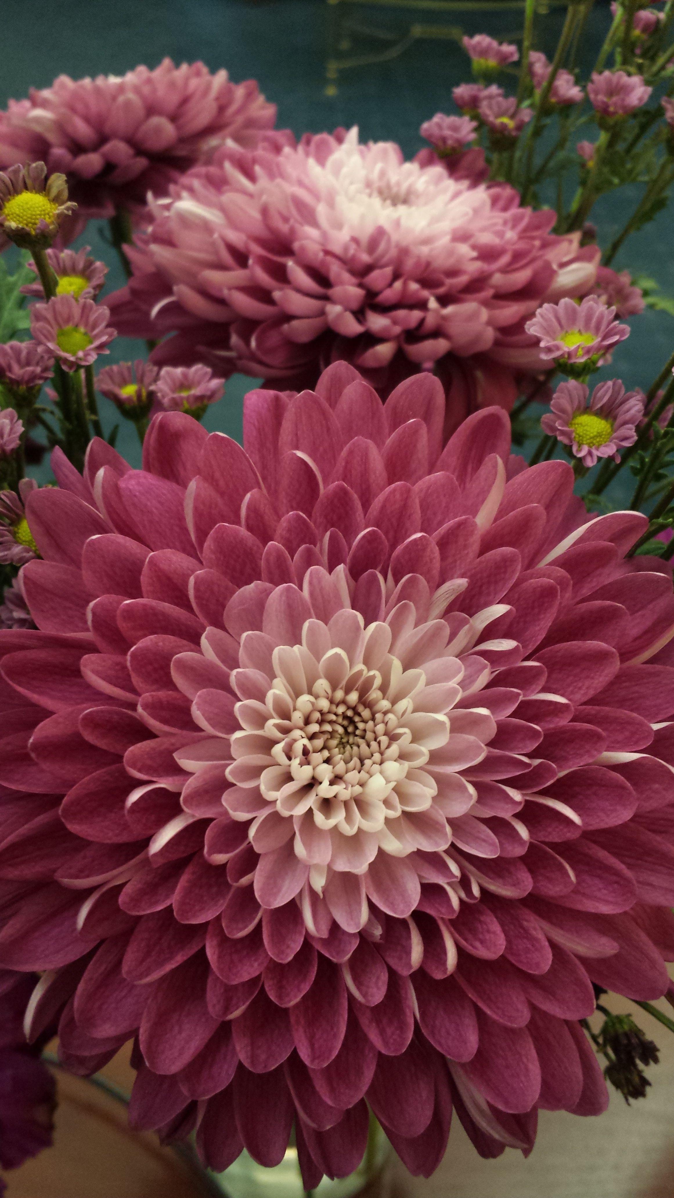 Dahlia Love this color