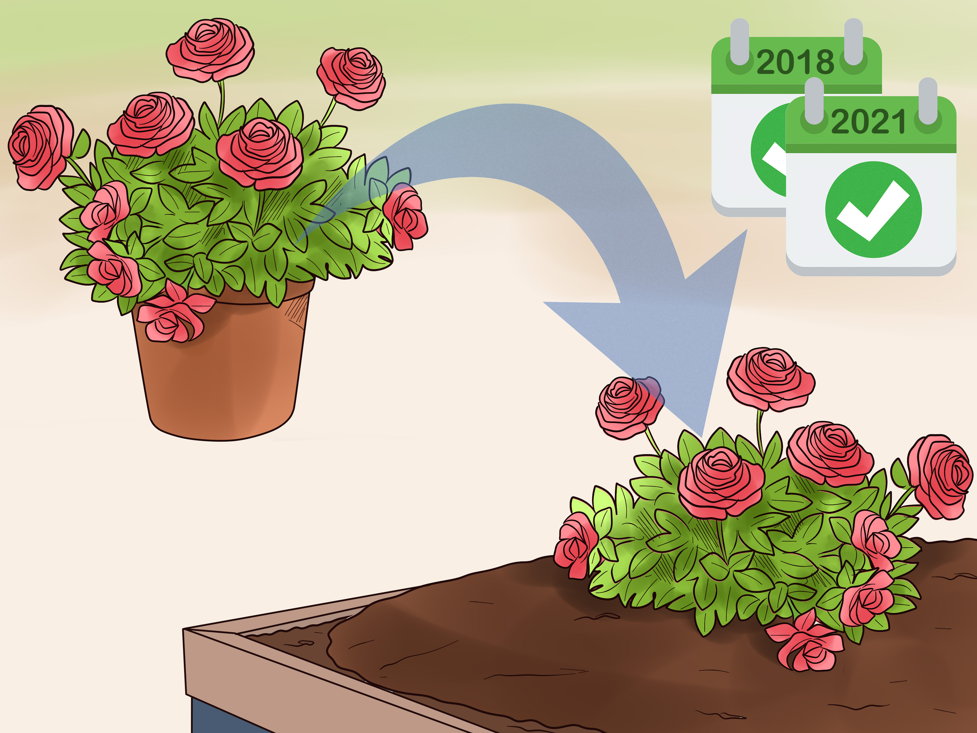 Grow Roses in Containers Step 16 Version 3