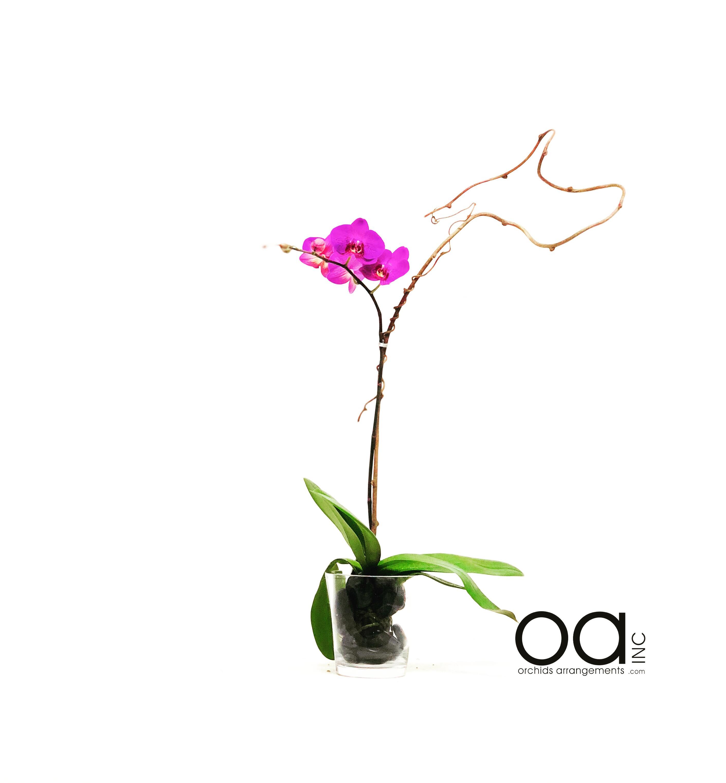 Send 1 Orchids Arrangements Fat Conical Vase