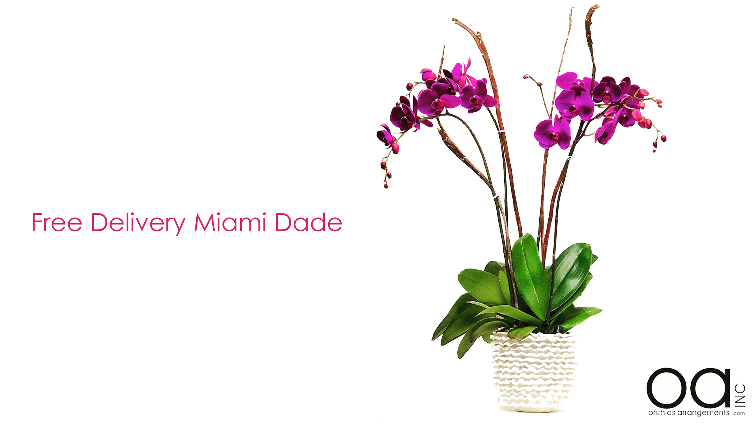Miami Florist Orchids Arrangements Inc