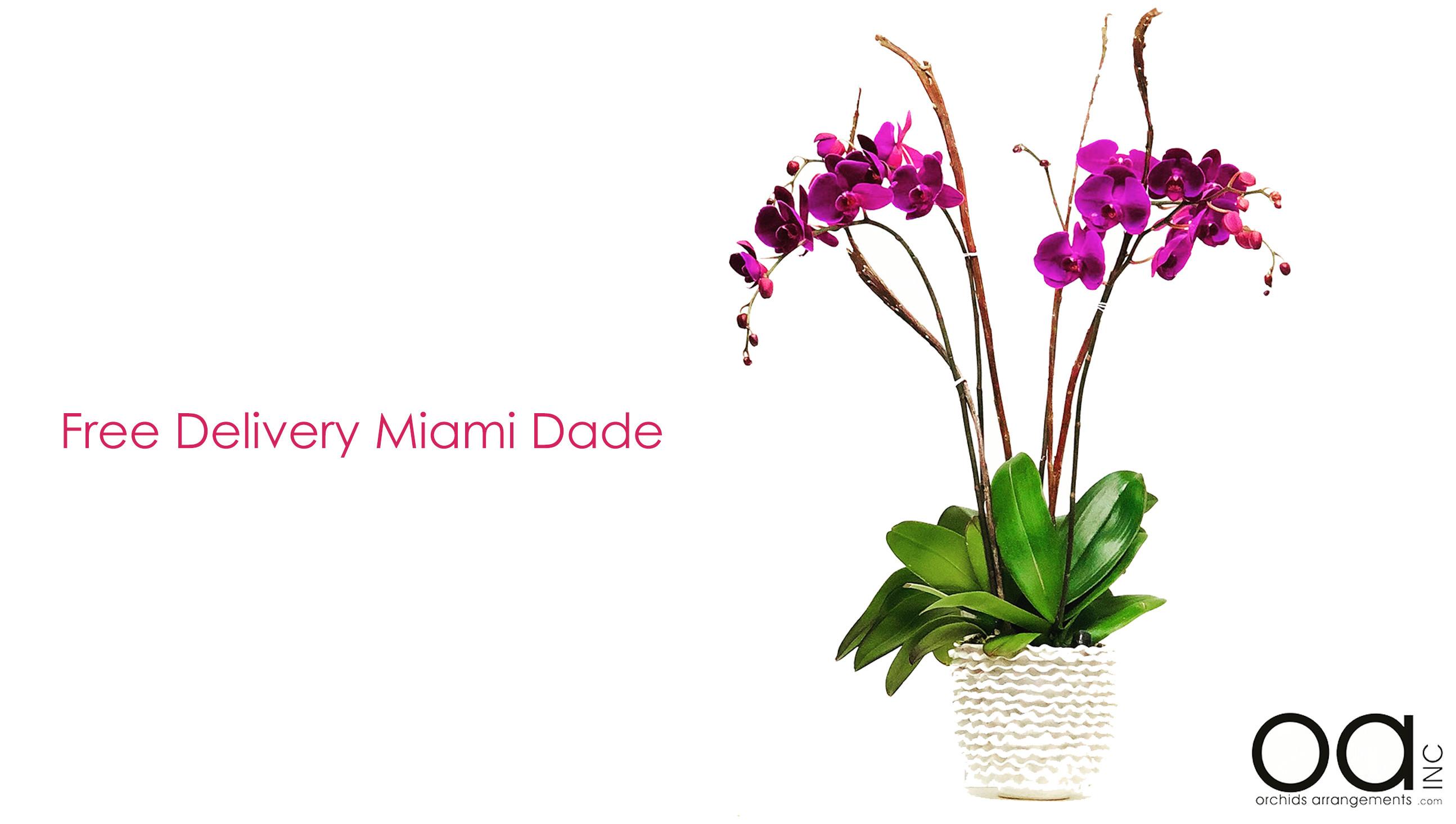 Miami Florist Orchids Arrangements Inc