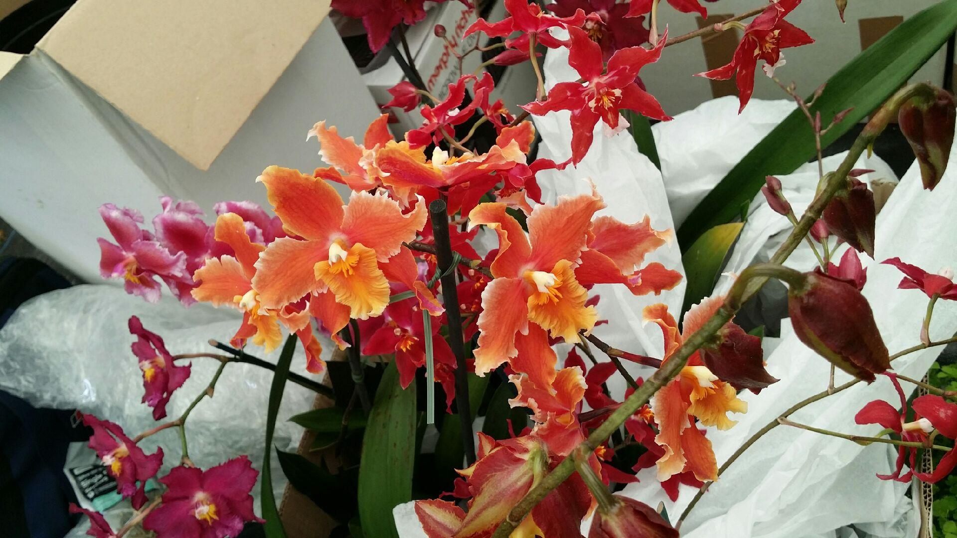 chelsea flower show Chelsea Flower Show
