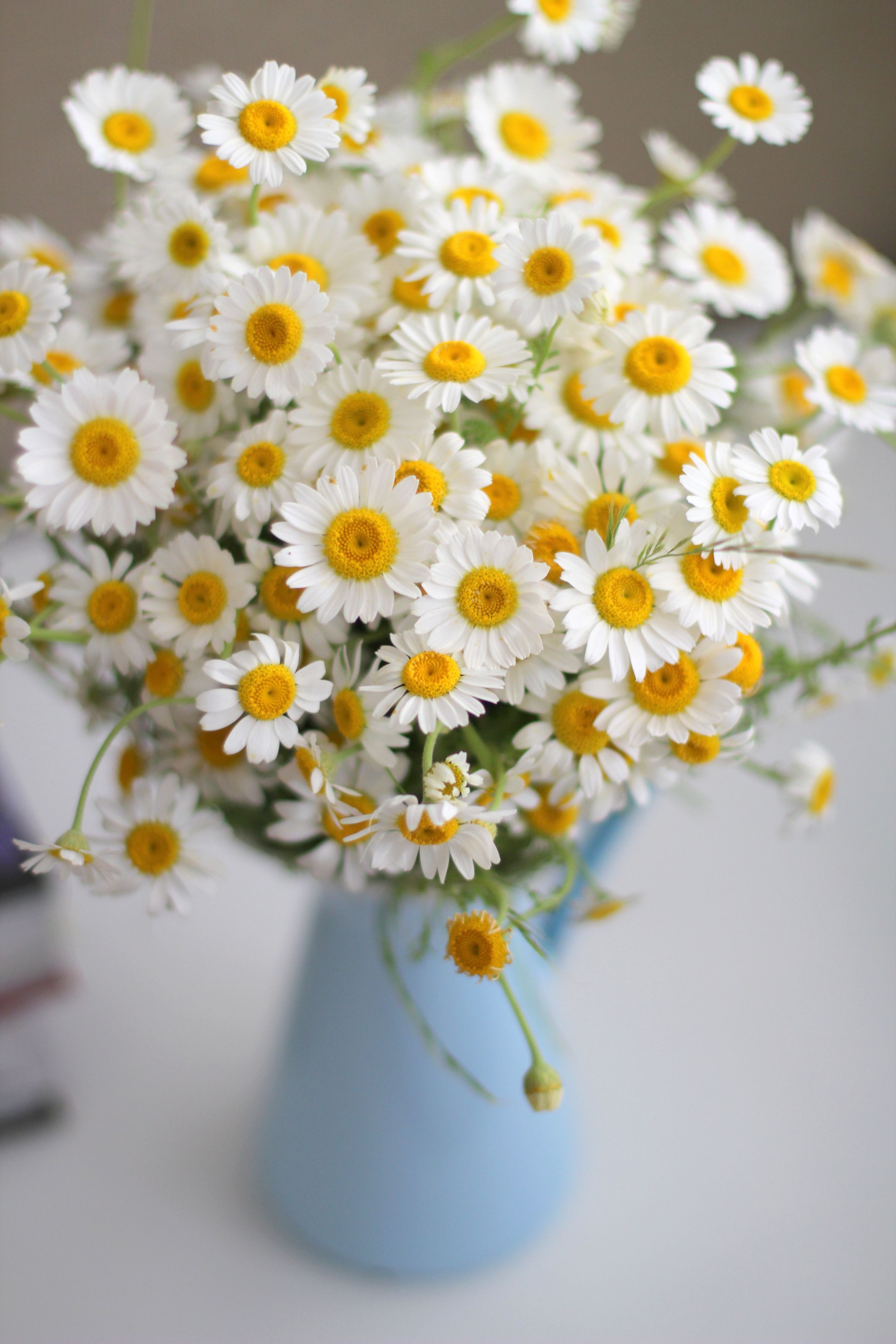 Roadside flowers can look perfectly polished indoors Harvest several dozen daisies and create an overflowing bouquet for the kitchen