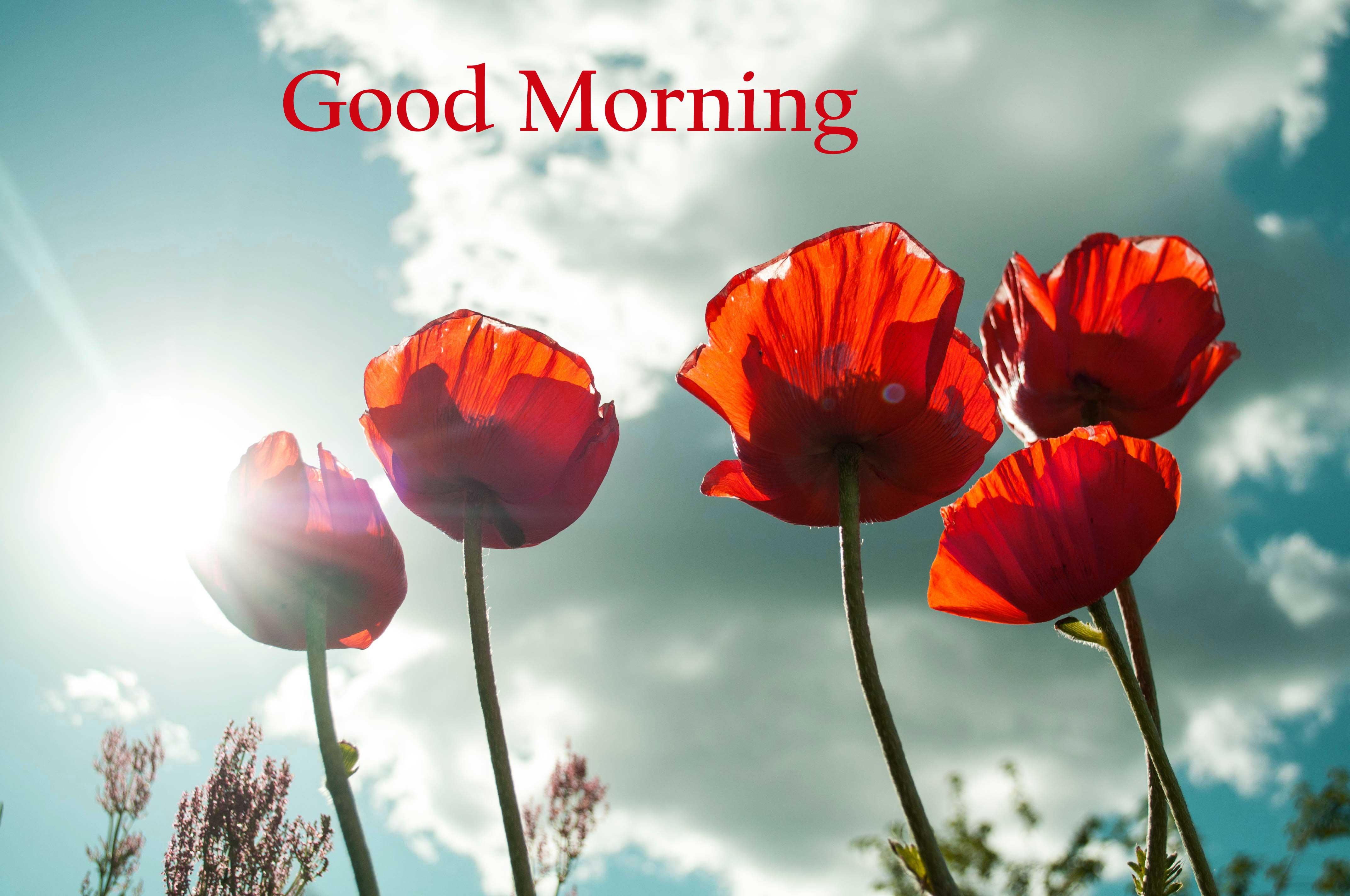 flowers good morning Pics